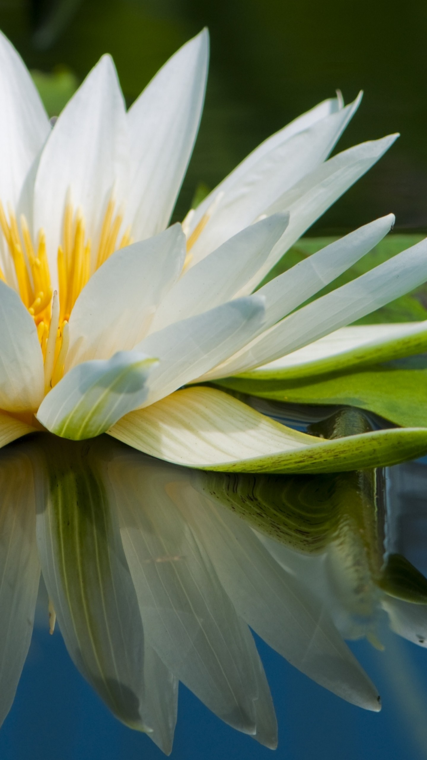 Wallpaper Lotus, 5k, 4k Wallpaper, Flowers, Lake, River