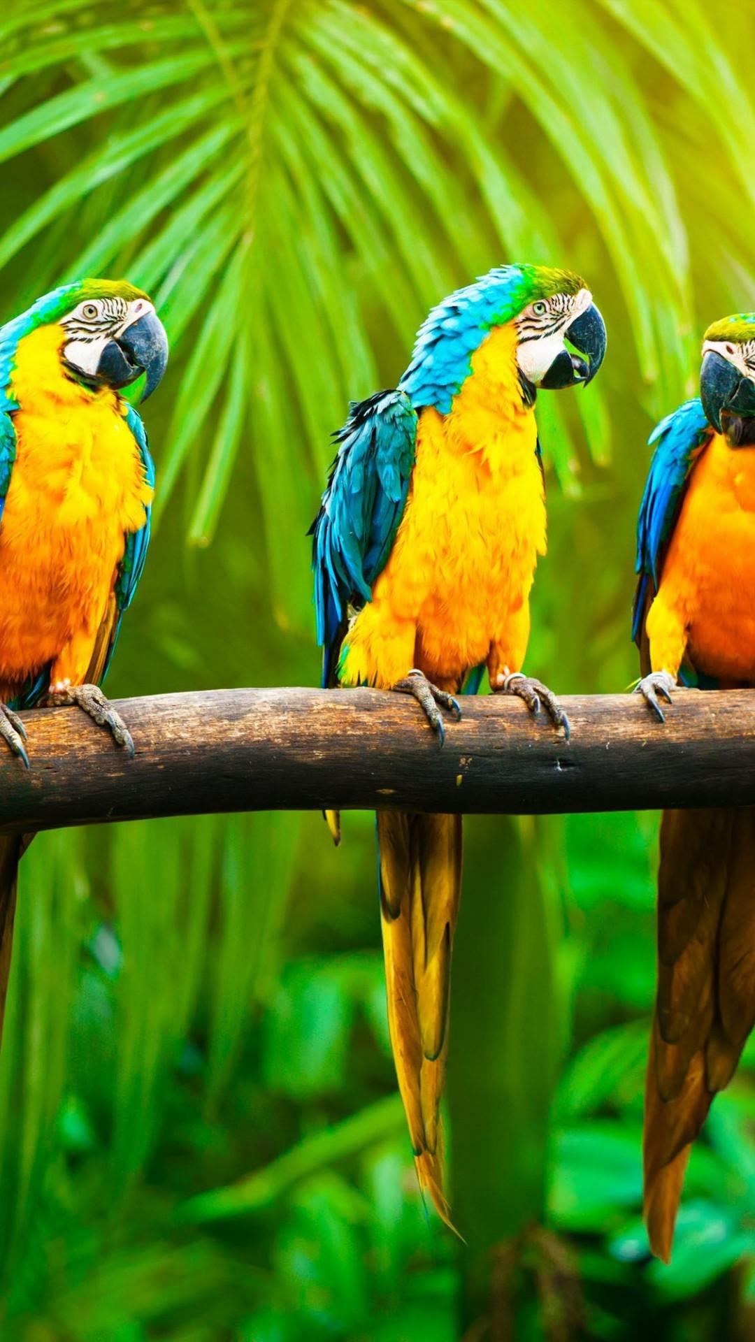 Wallpaper Macaw Parrot Tropics Animals 4566