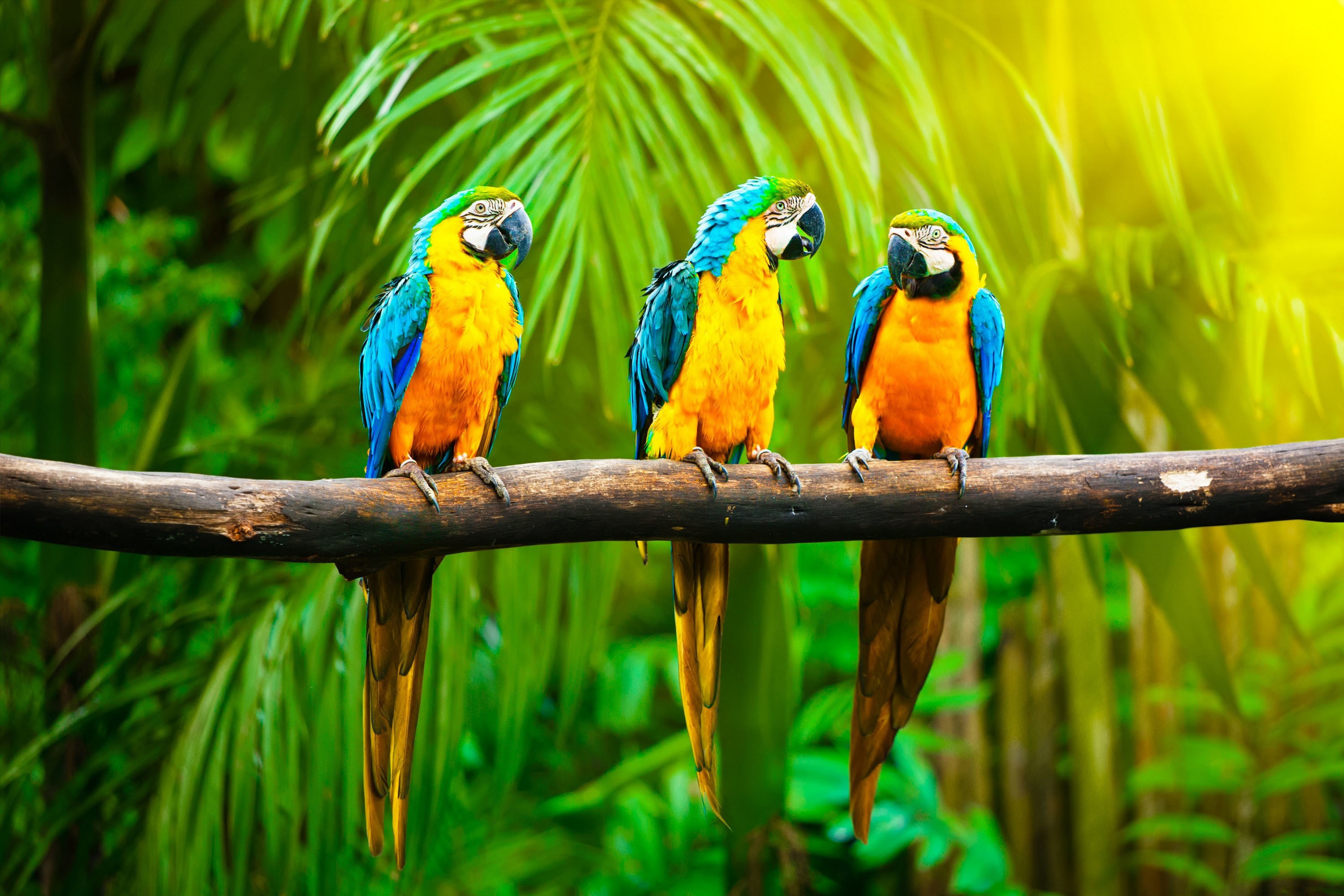 Best Military Branch >> Wallpaper Macaw, parrot, tropics, Animals #4566