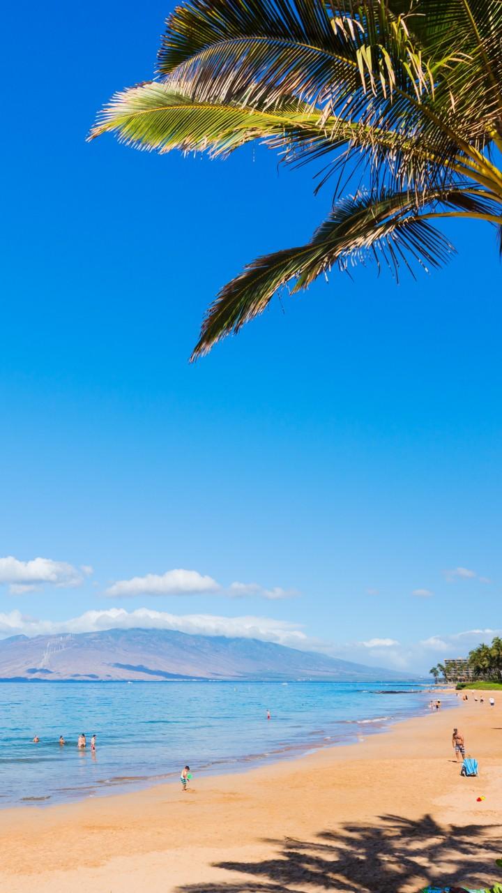 Wallpaper Maui Hawaii Beach Ocean Coast Palm Sky 5k Nature 16700