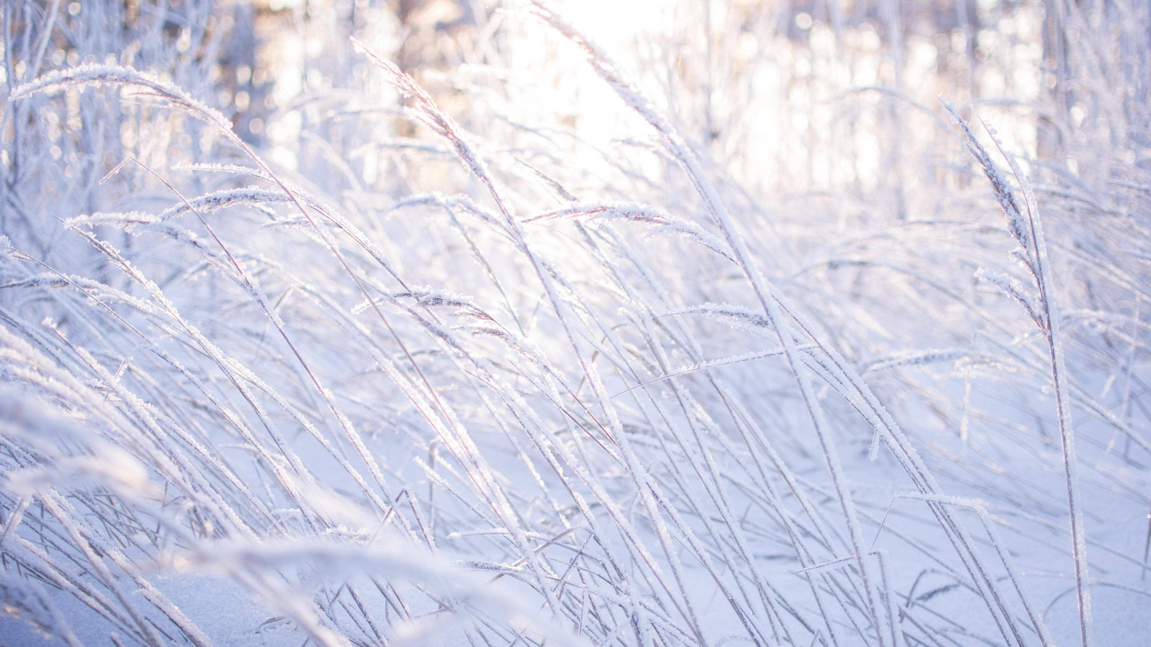 Wallpaper Meadows 5k 4k Wallpaper 8k Snow Frost