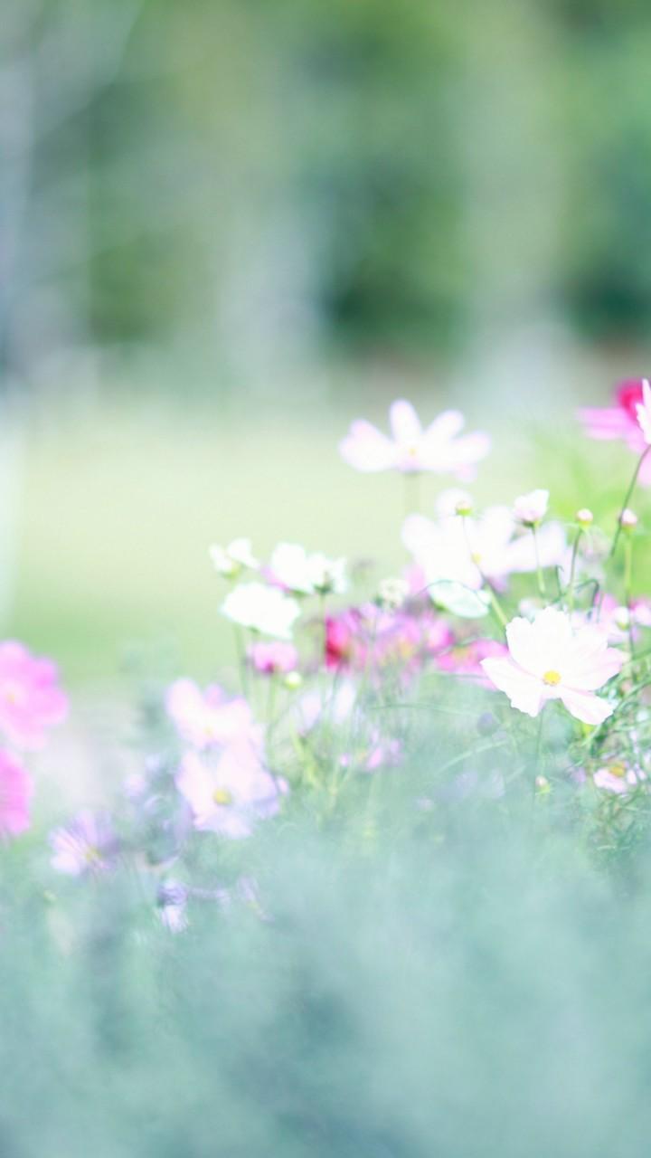 5 Spring Trends From London Fashion Week: Wallpaper Meadows, 5k, 4k Wallpaper, Wildflowers, Flowers