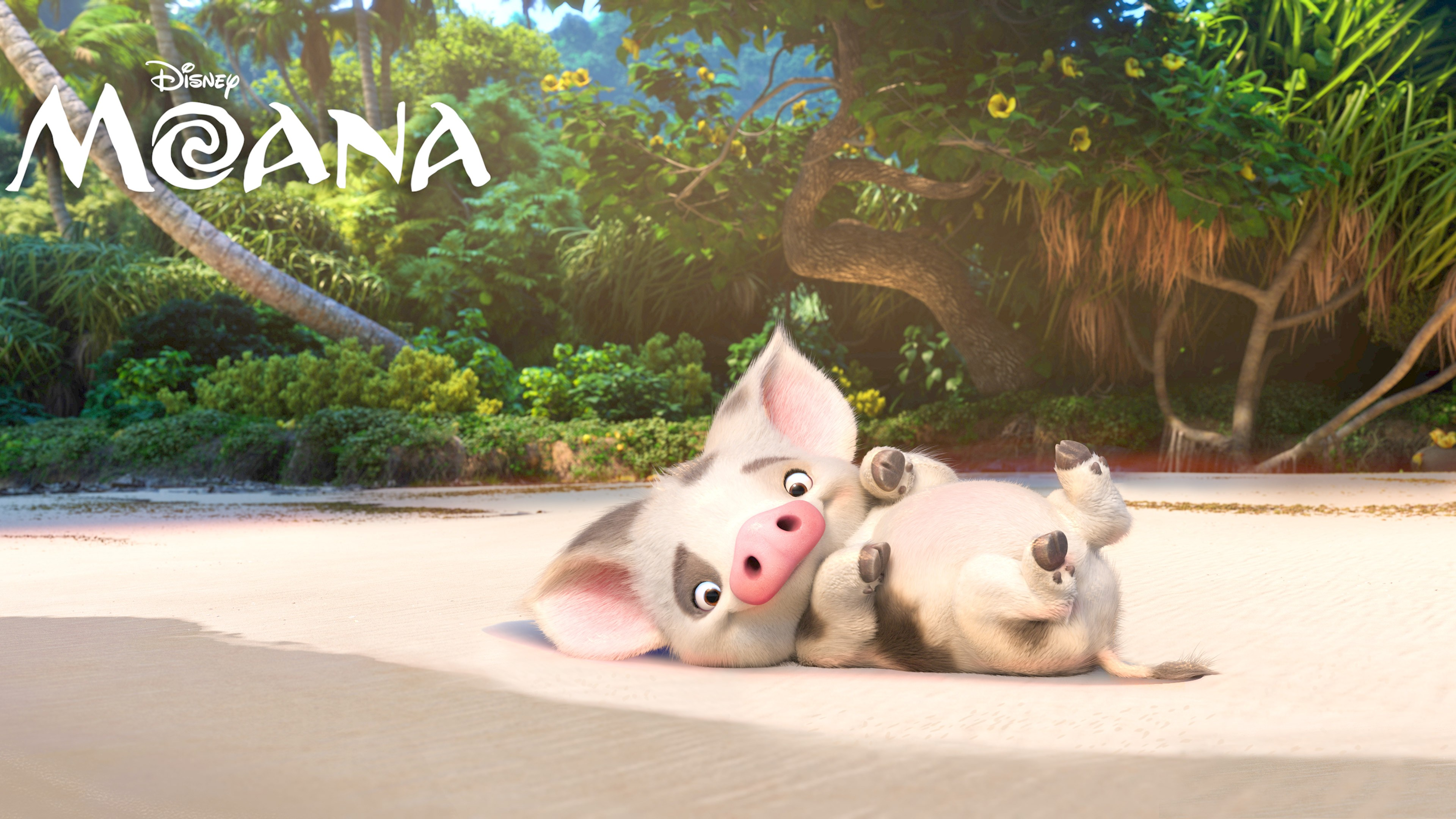 Wallpaper moana pugo piggy best animation movies of for Terengganu home wallpaper 2016