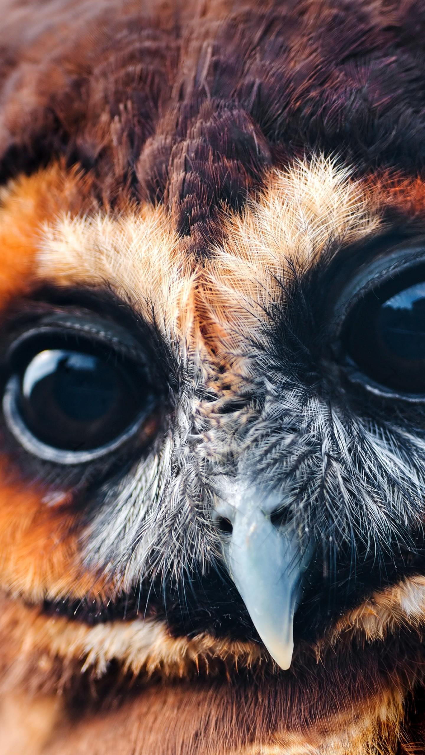 Wallpaper owl 5k 4k wallpaper national geographic eyes - National geographic wild wallpapers ...