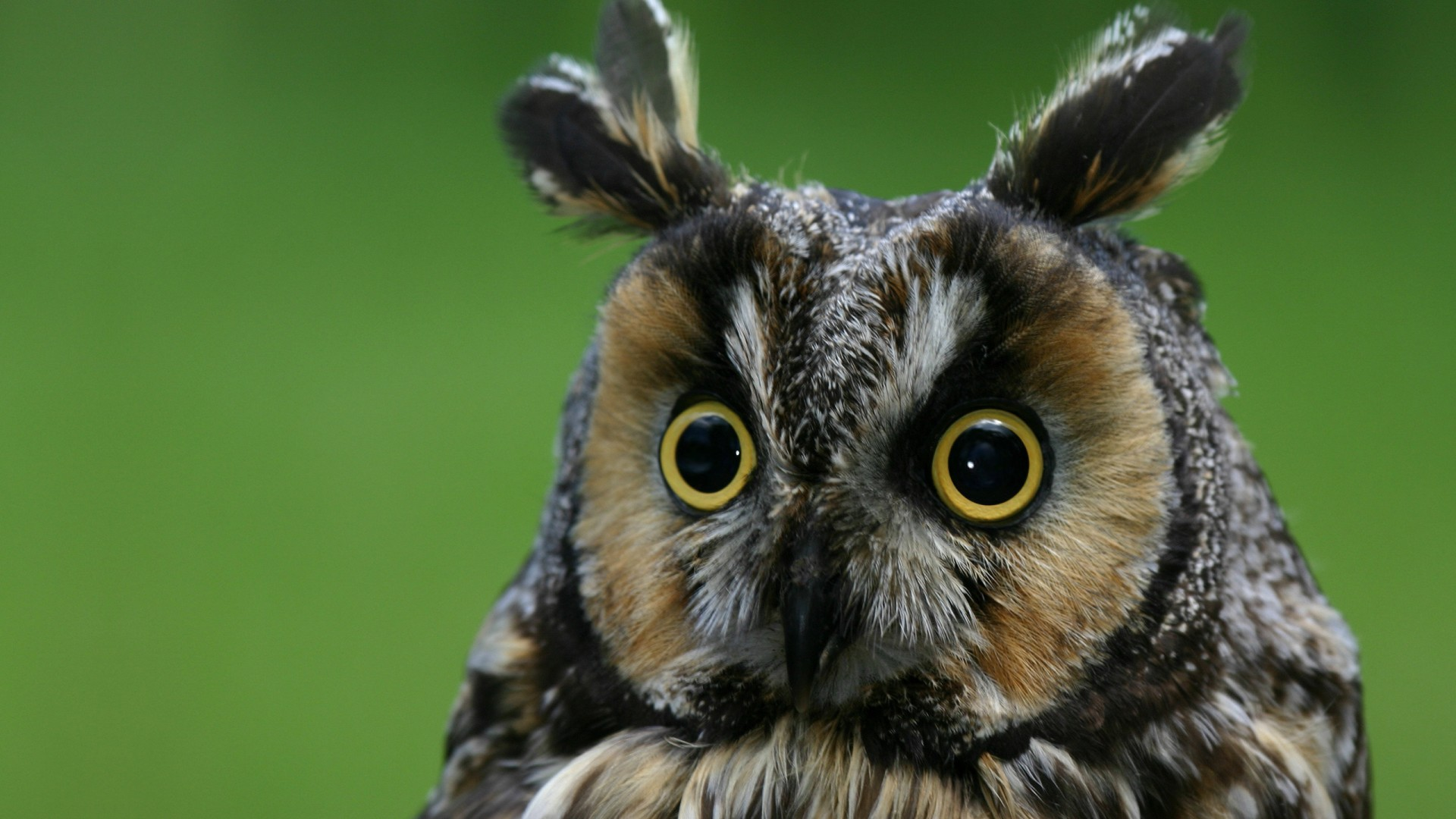 Wallpaper Owl Eagle Owl Funny Nature Plumy Animals 4075