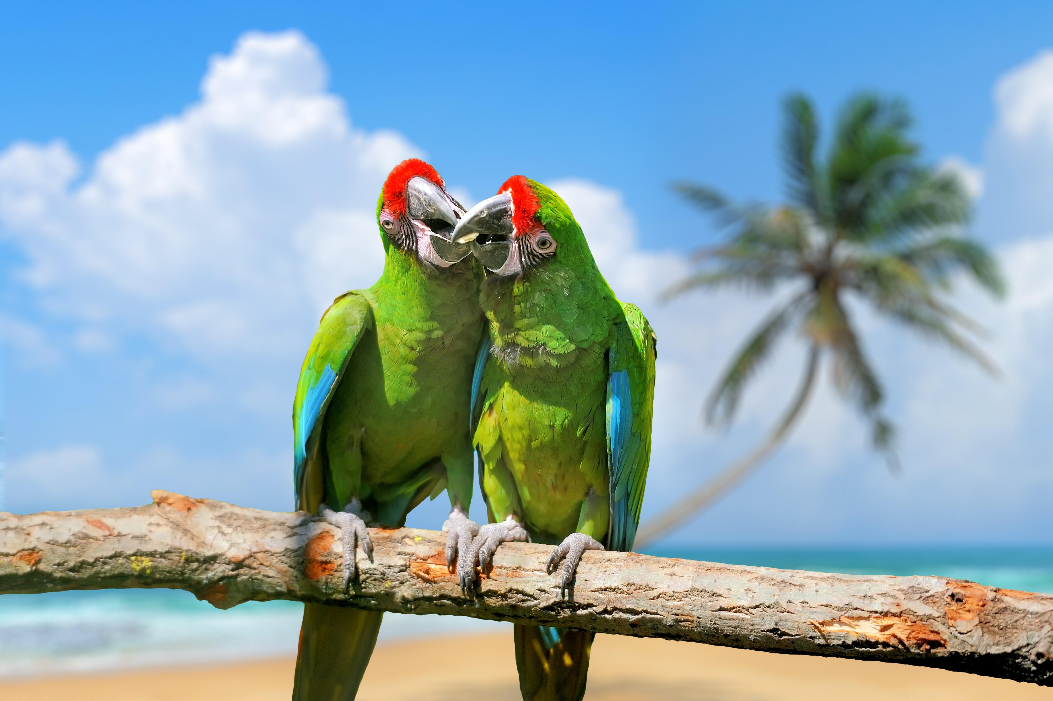 Wallpaper Parrot Plumage Branch Exotic Birds Green