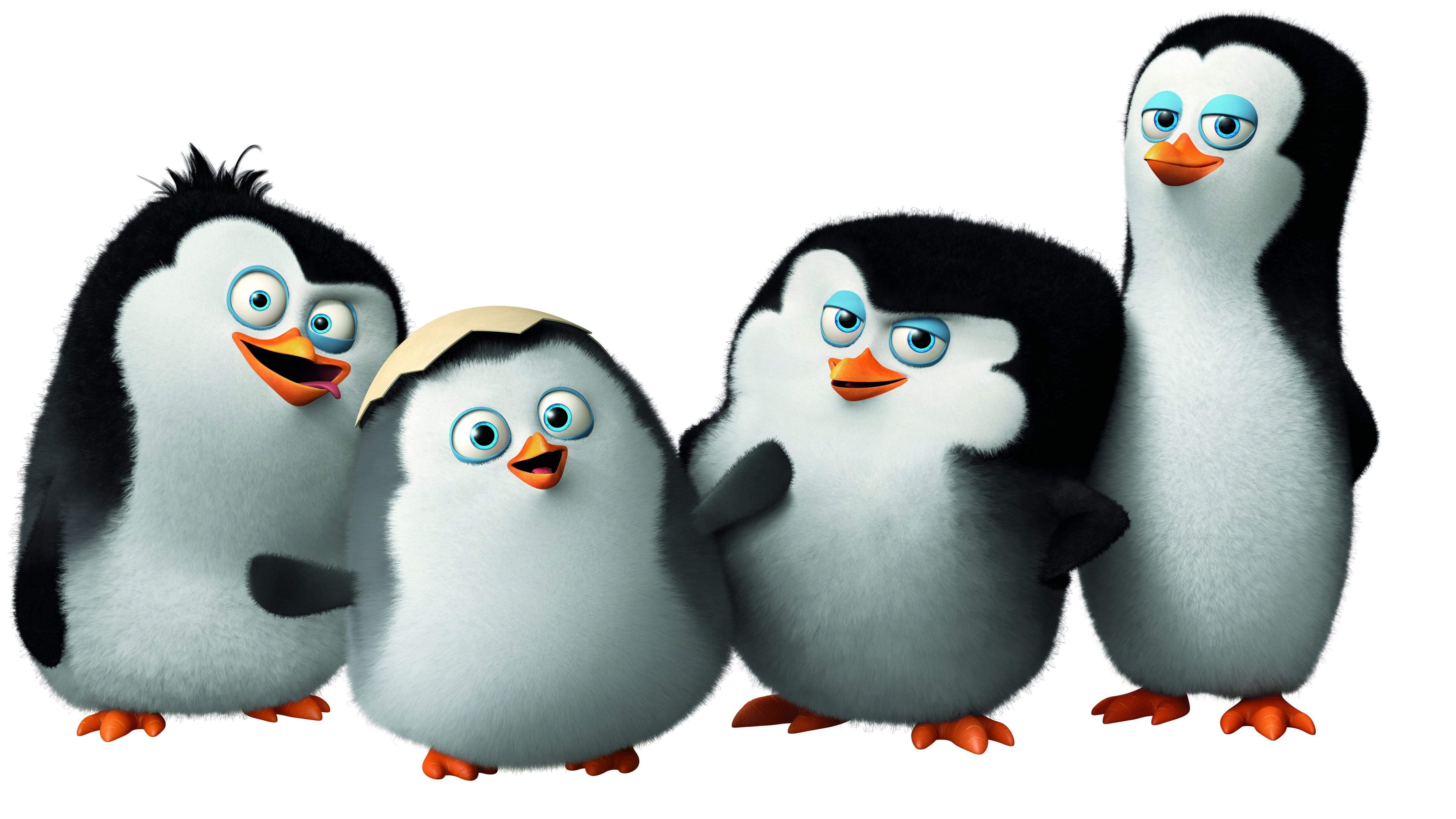 Wallpaper Penguins of Madagascar, cute penguin, cartoon ...