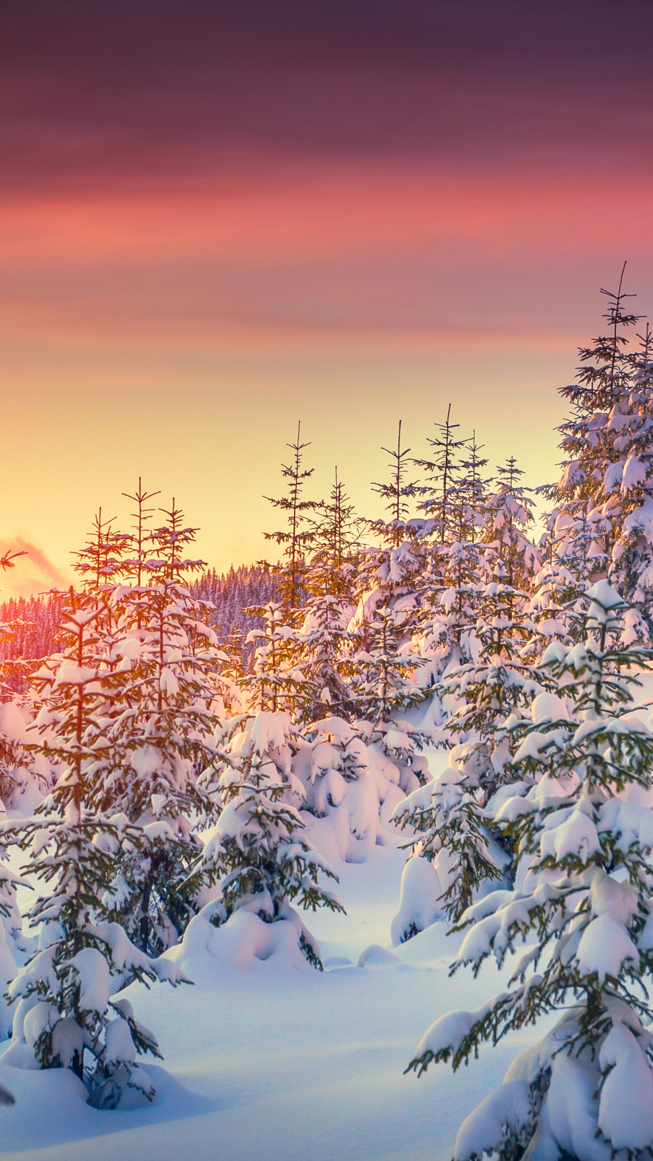 Wallpaper Pines 5k 4k Wallpaper 8k Snow Sunset Winter Nature 5293