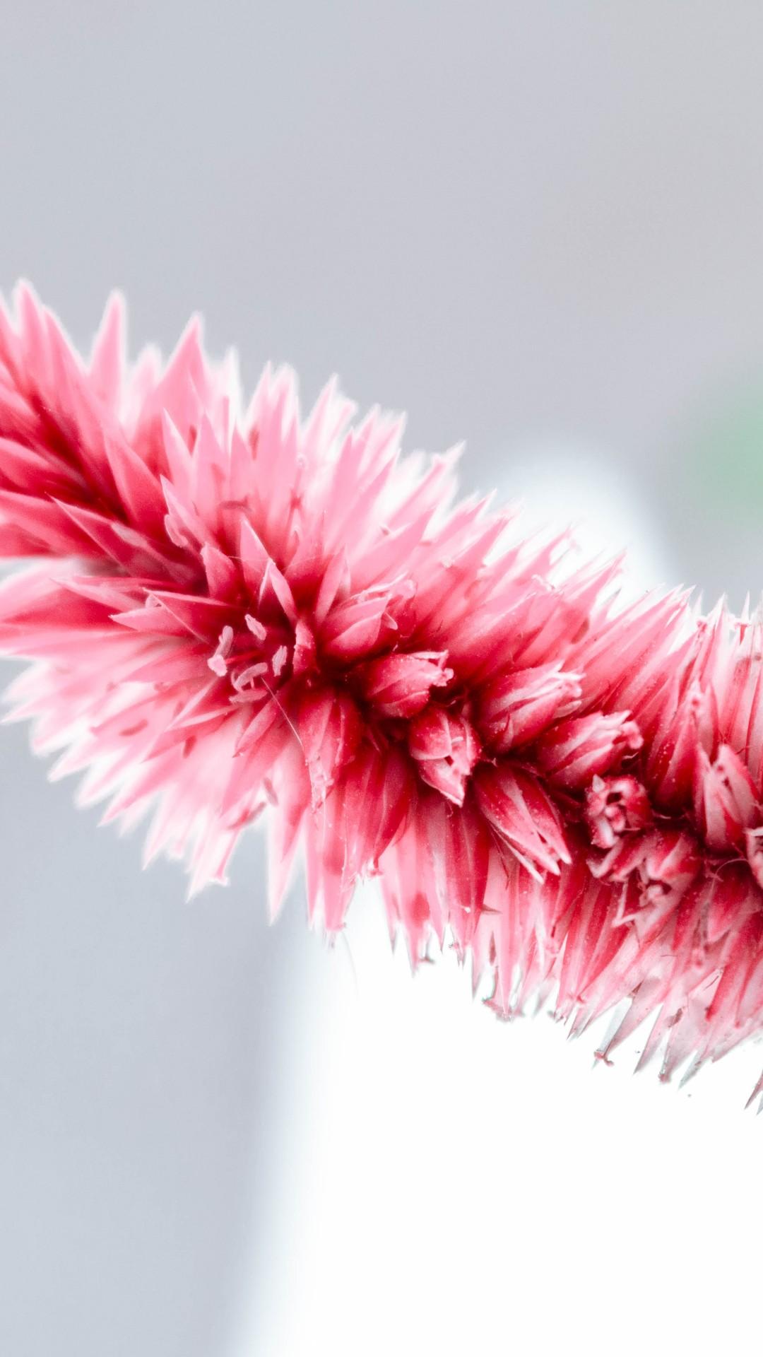 Wallpaper Pink White Flower 5k Nature 20030