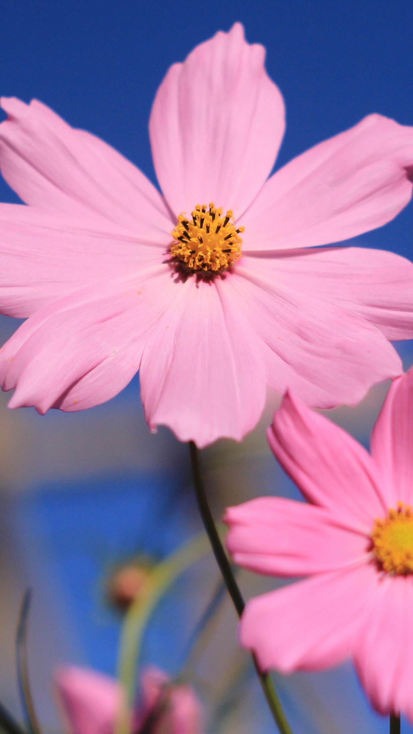 Wallpaper Pink 4k Hd Wallpaper Flower Summer Nature