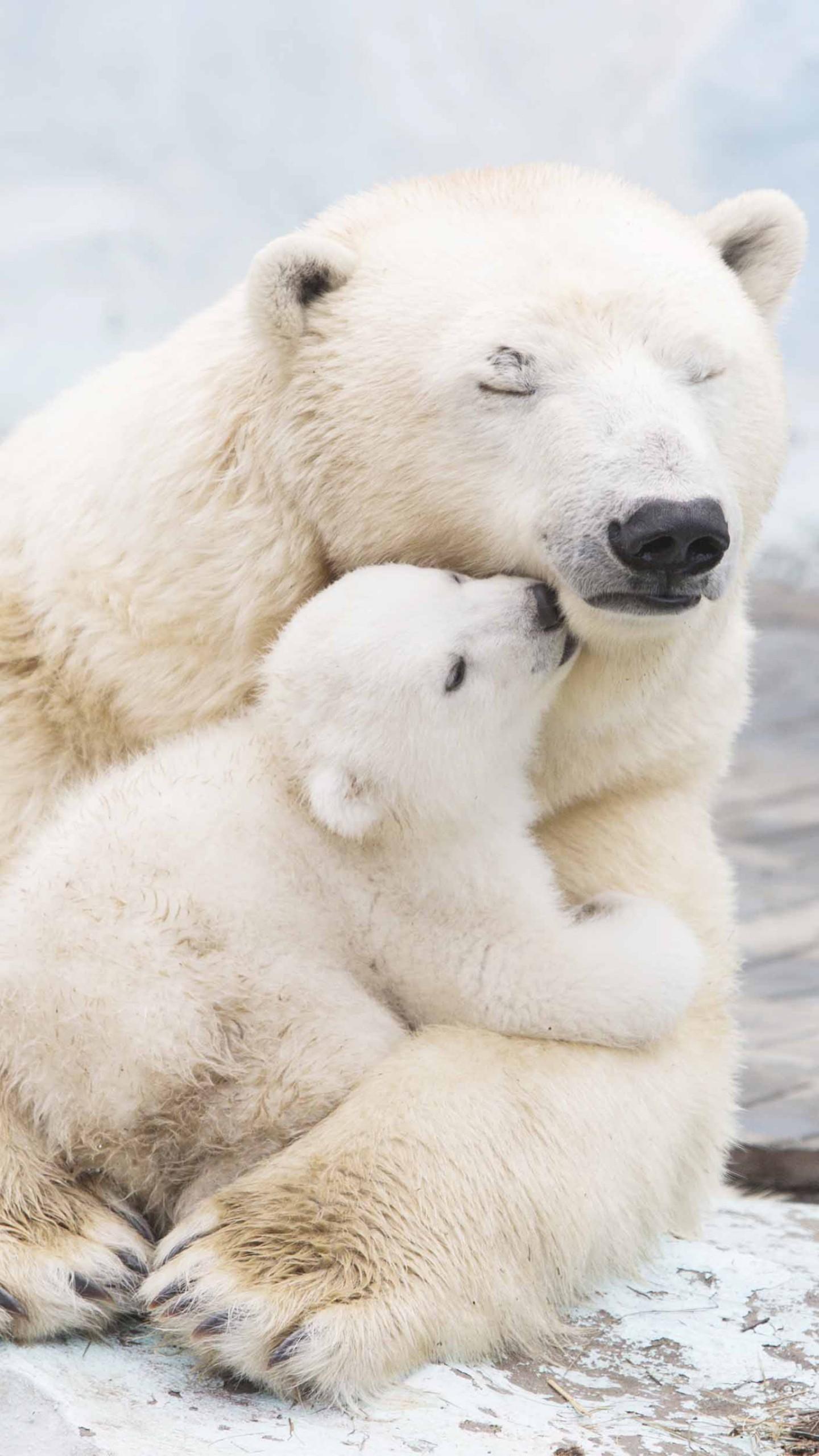 Wallpaper polar bears, cute animals, 4k, Animals #17430