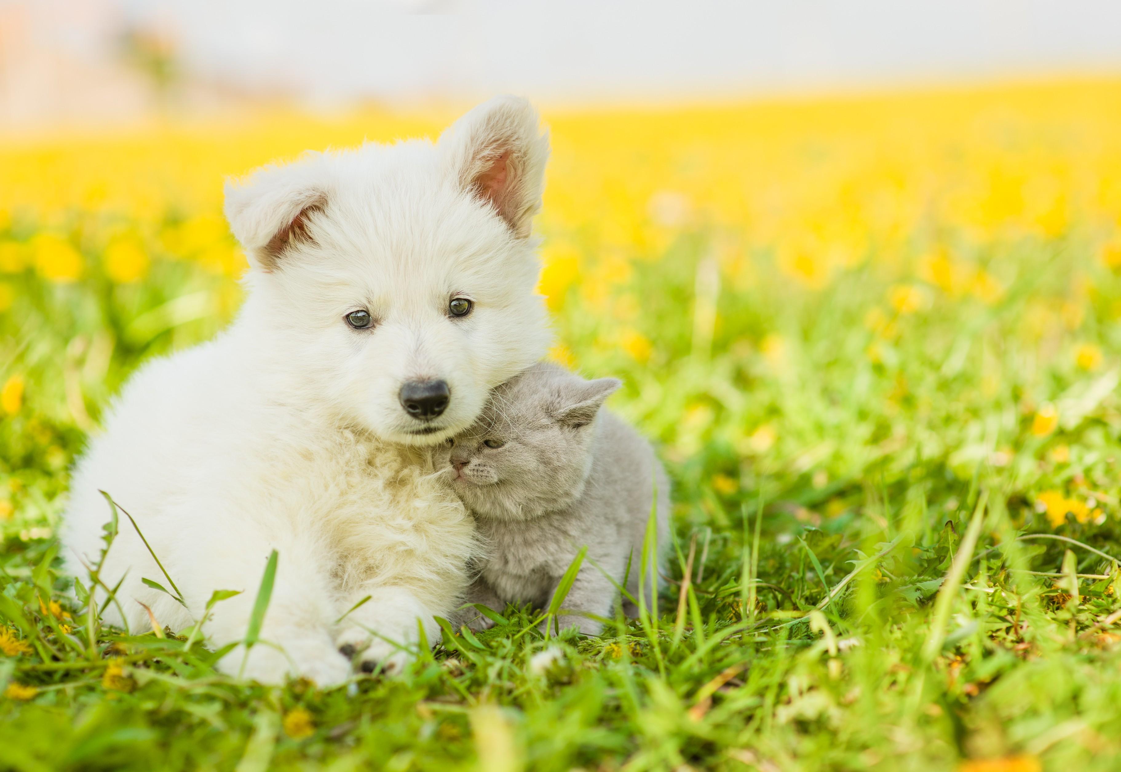 Wallpaper Puppy Kitten Funny Animals 4k Animals 16684