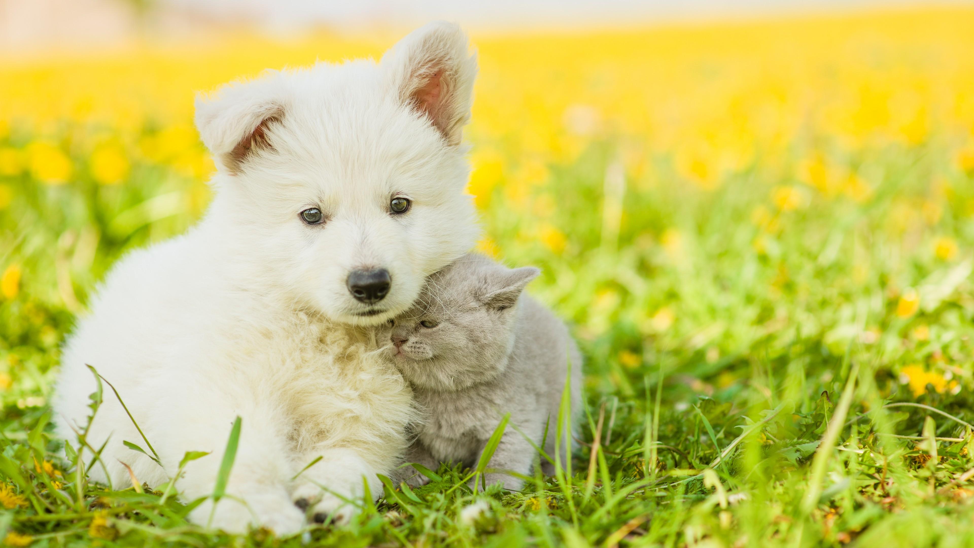 Wallpaper puppy, kitten, funny animals
