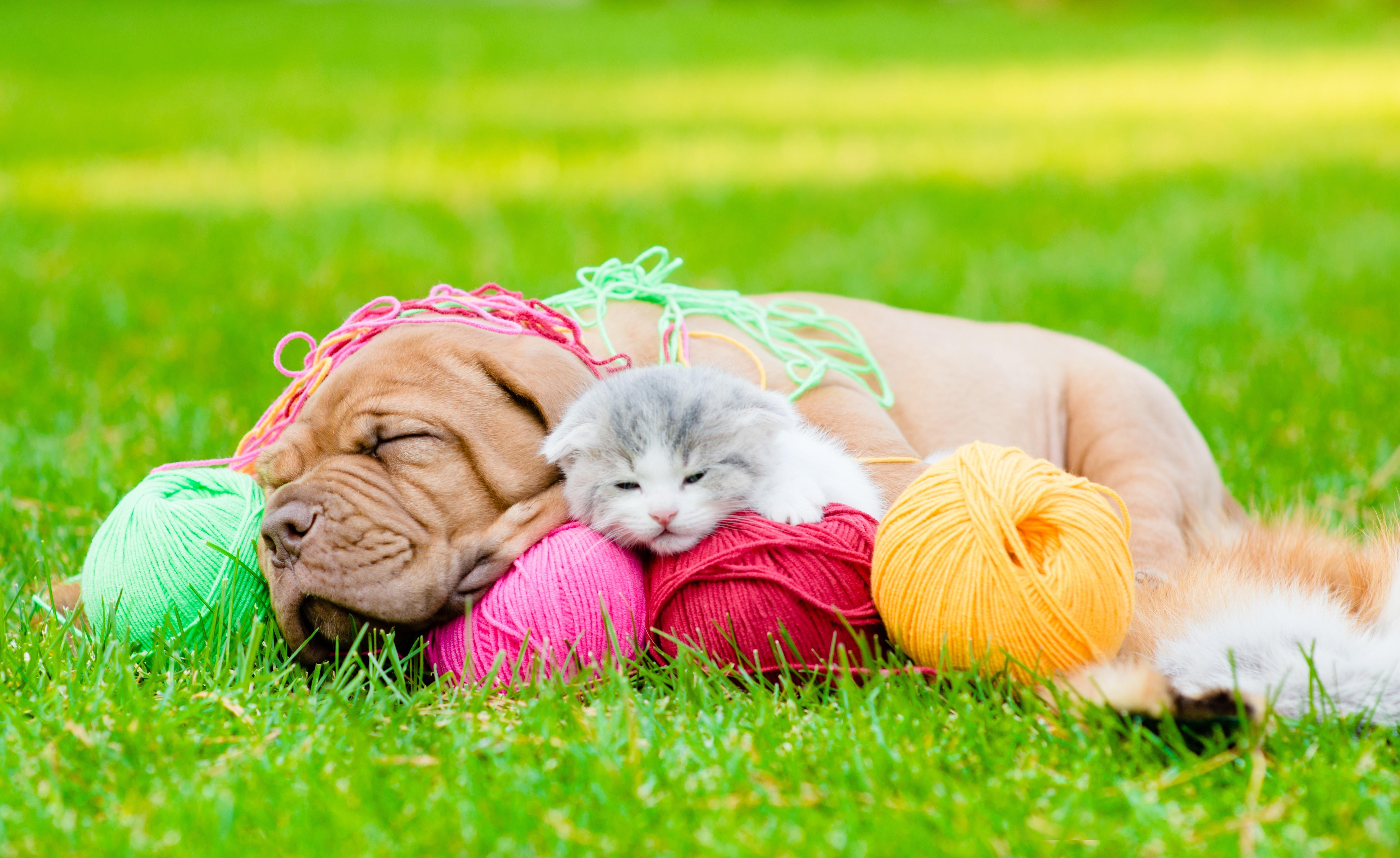 Wallpaper Puppy Kitten Funny Animals 5k Animals 16062