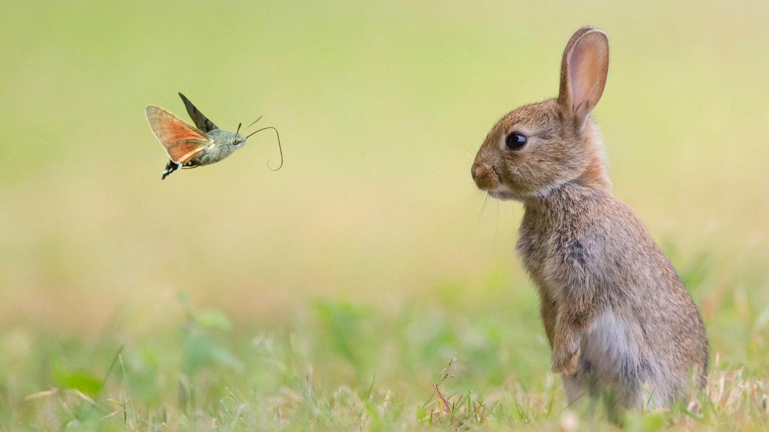Wallpaper rabbit, cute animals, butterfly, 4k, Animals #15980