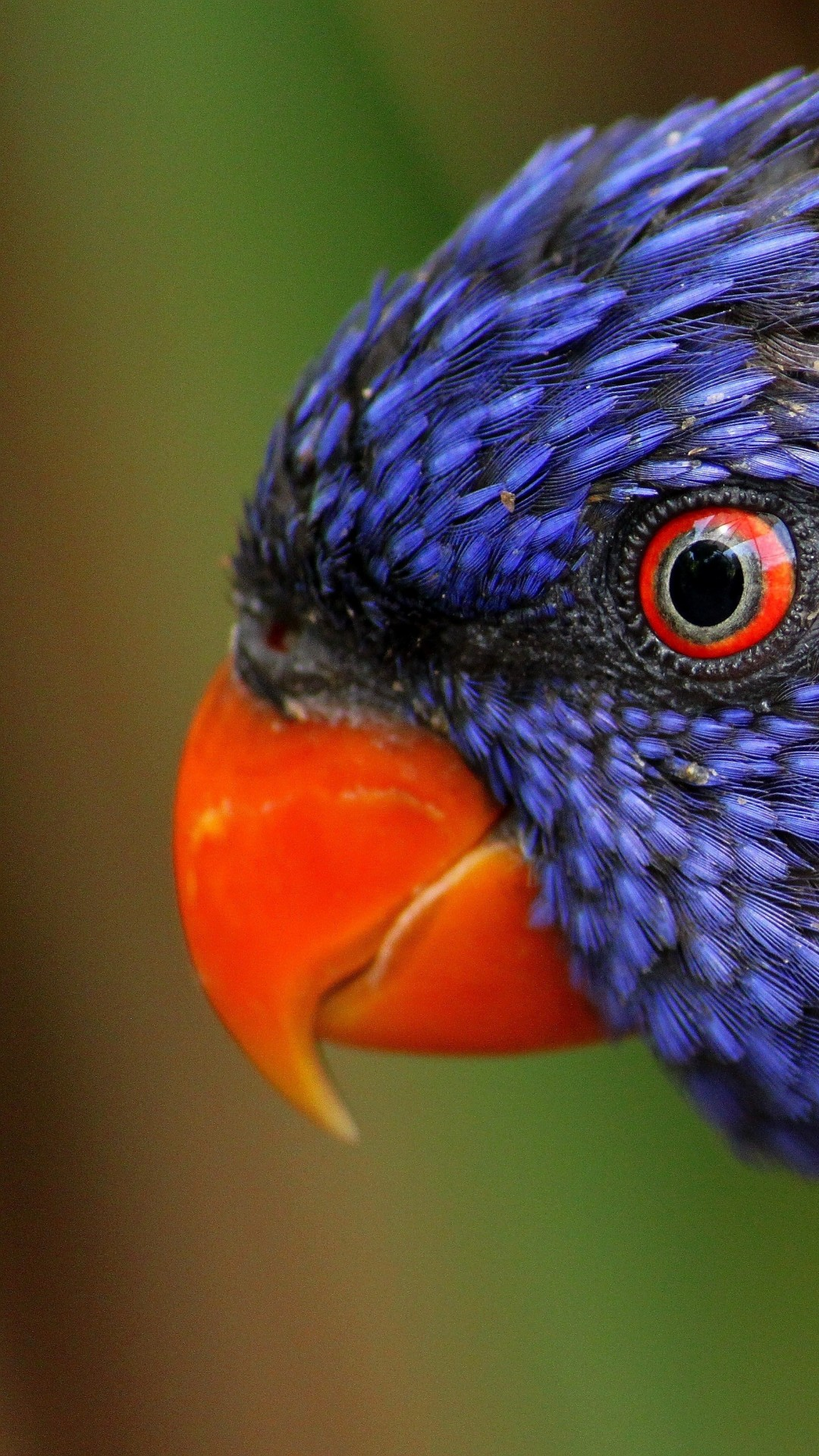 colorful animals birds exotic rainbow parrot wallpapers 4k hd 2k wallpapershome
