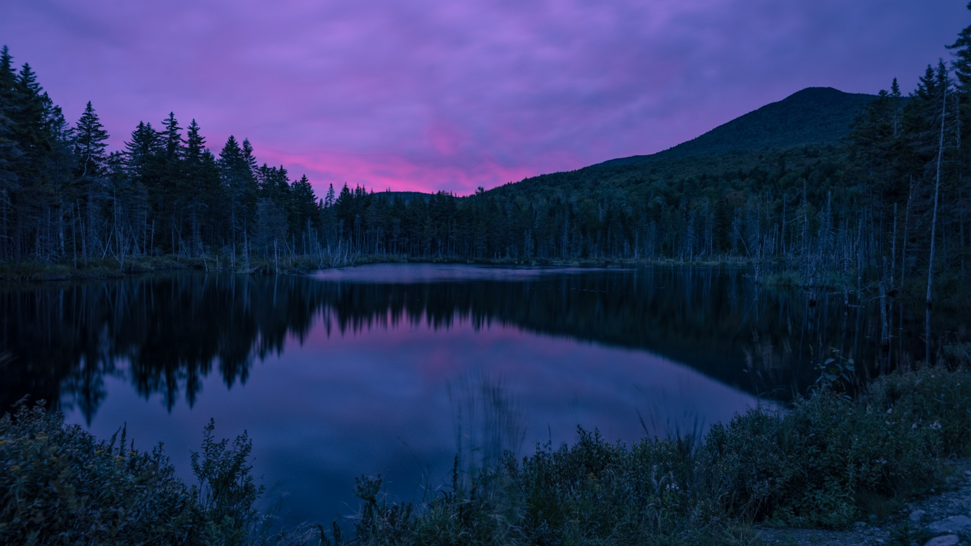Wallpaper River, Forest, Sky, Evening, HD, Nature #15669