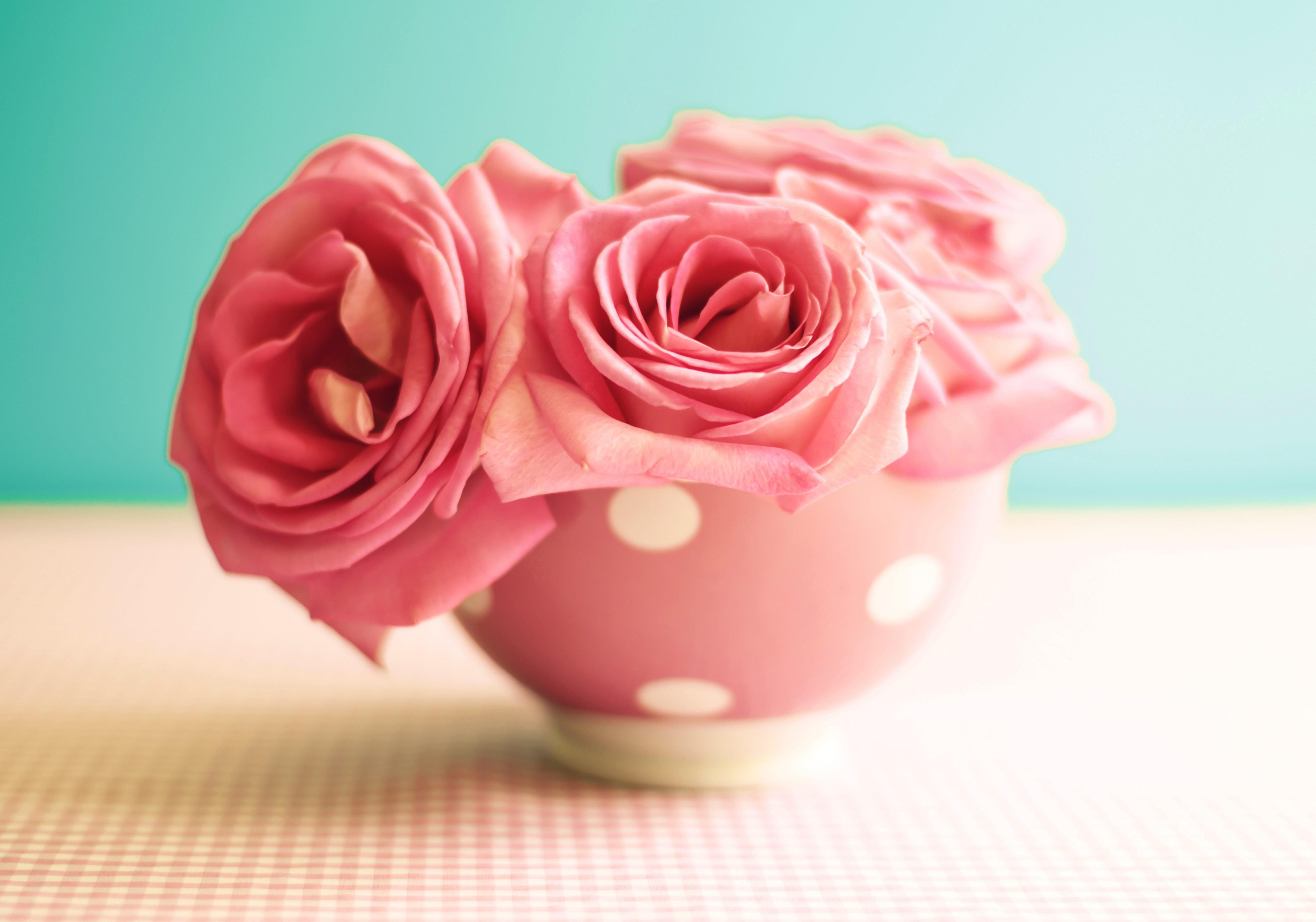 Wallpaper roses 5k 4k wallpaper 8k flowers pink mug nature 6477 your resolution 1024x1024 mightylinksfo