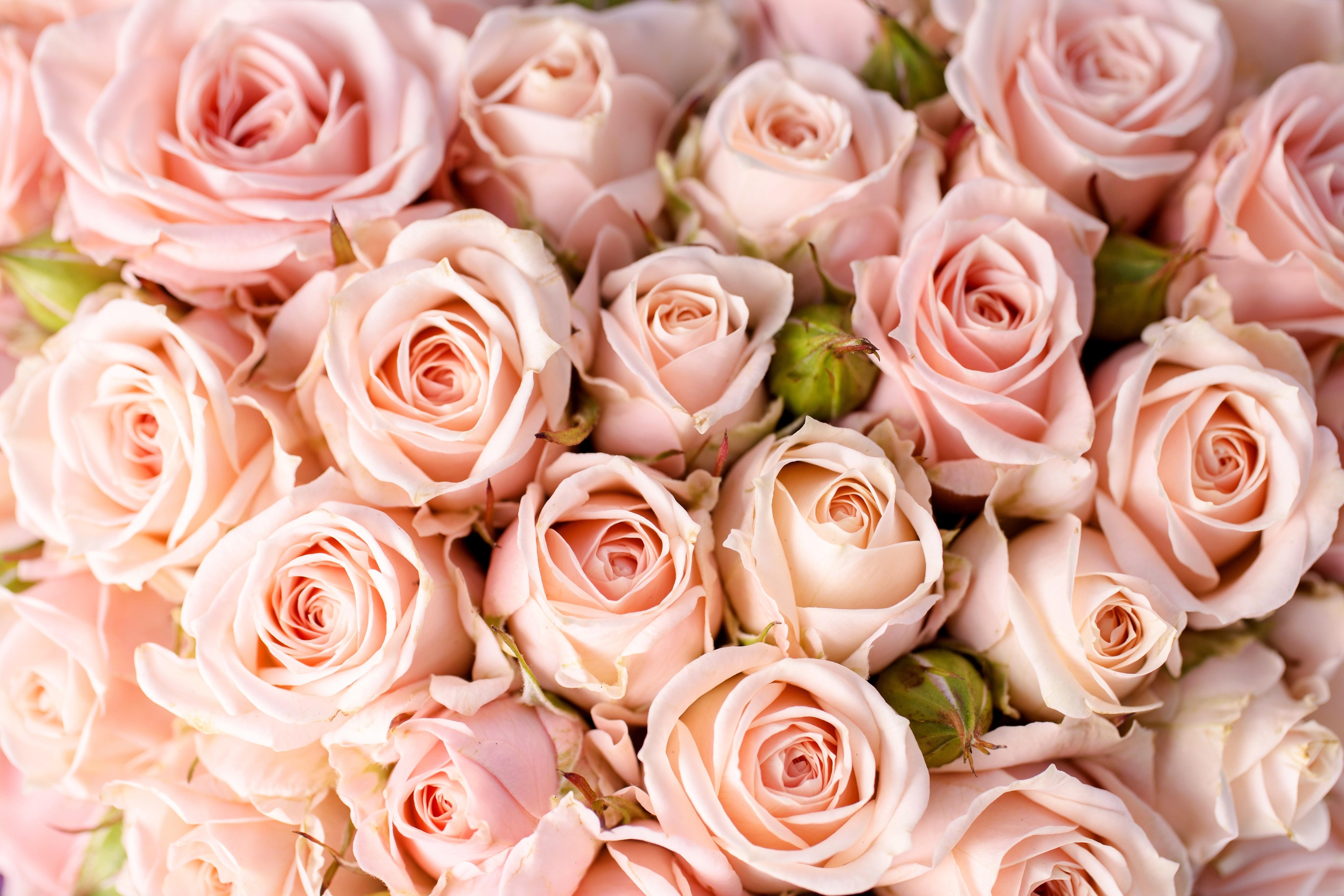 wallpaper roses 5k 4k wallpaper 8k flowers pink nature 5346. Black Bedroom Furniture Sets. Home Design Ideas