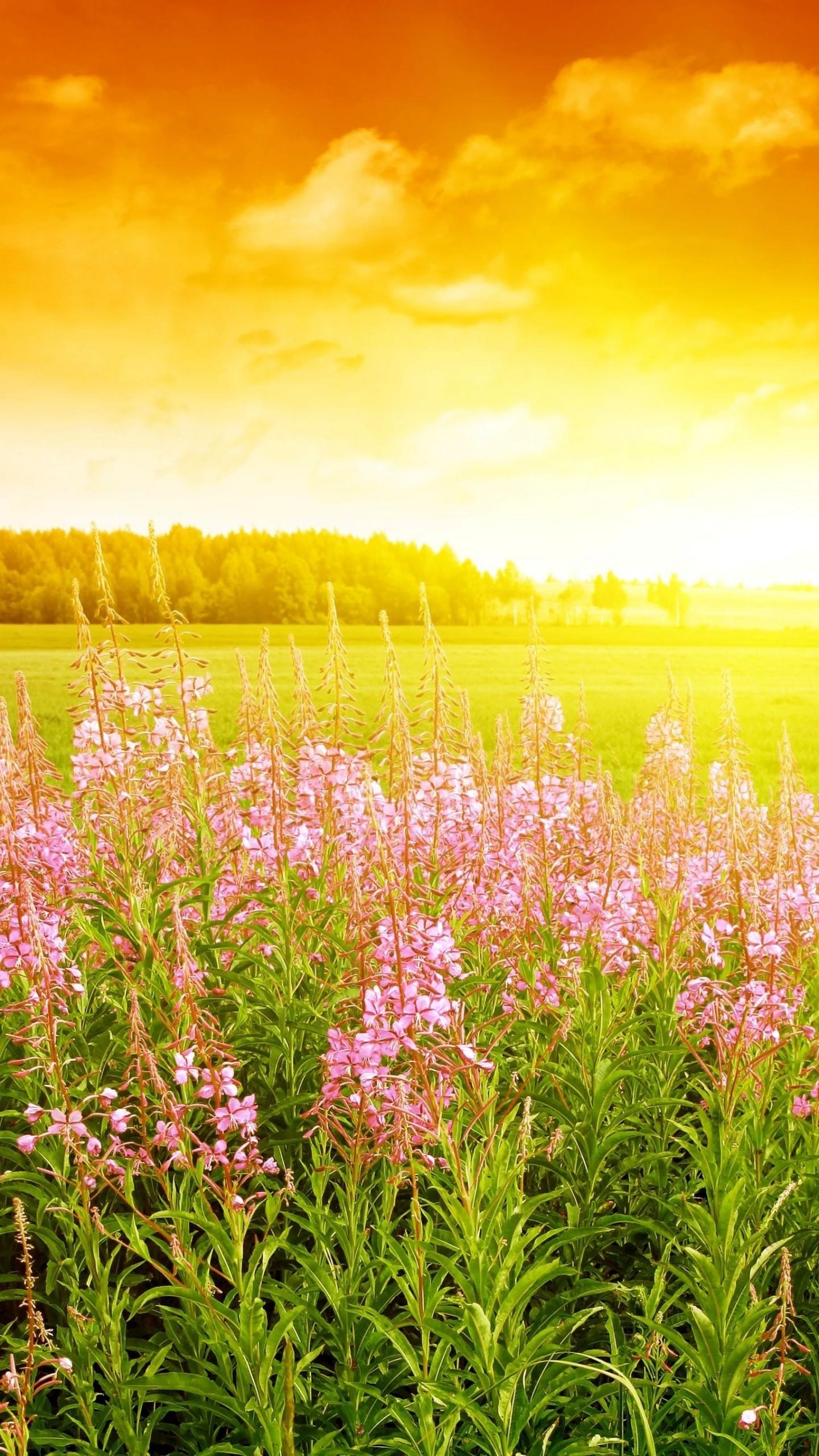 Wallpaper Sky 4k Hd Wallpaper Sunset Field Flowers