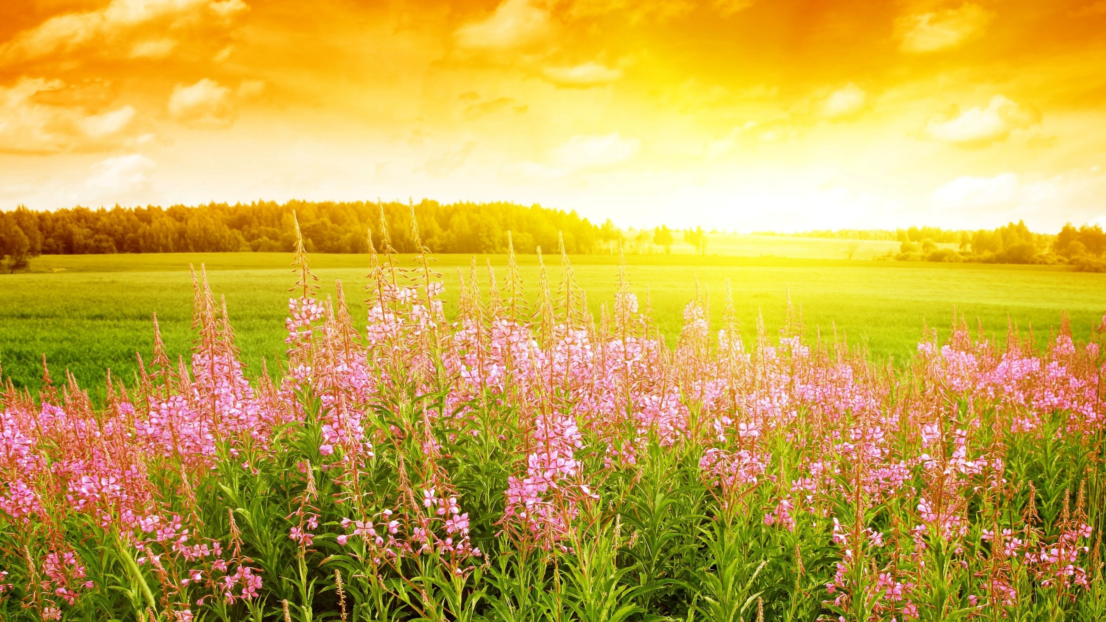 Wallpaper Sky 4k Hd Wallpaper Sunset Field Flowers Nature 647