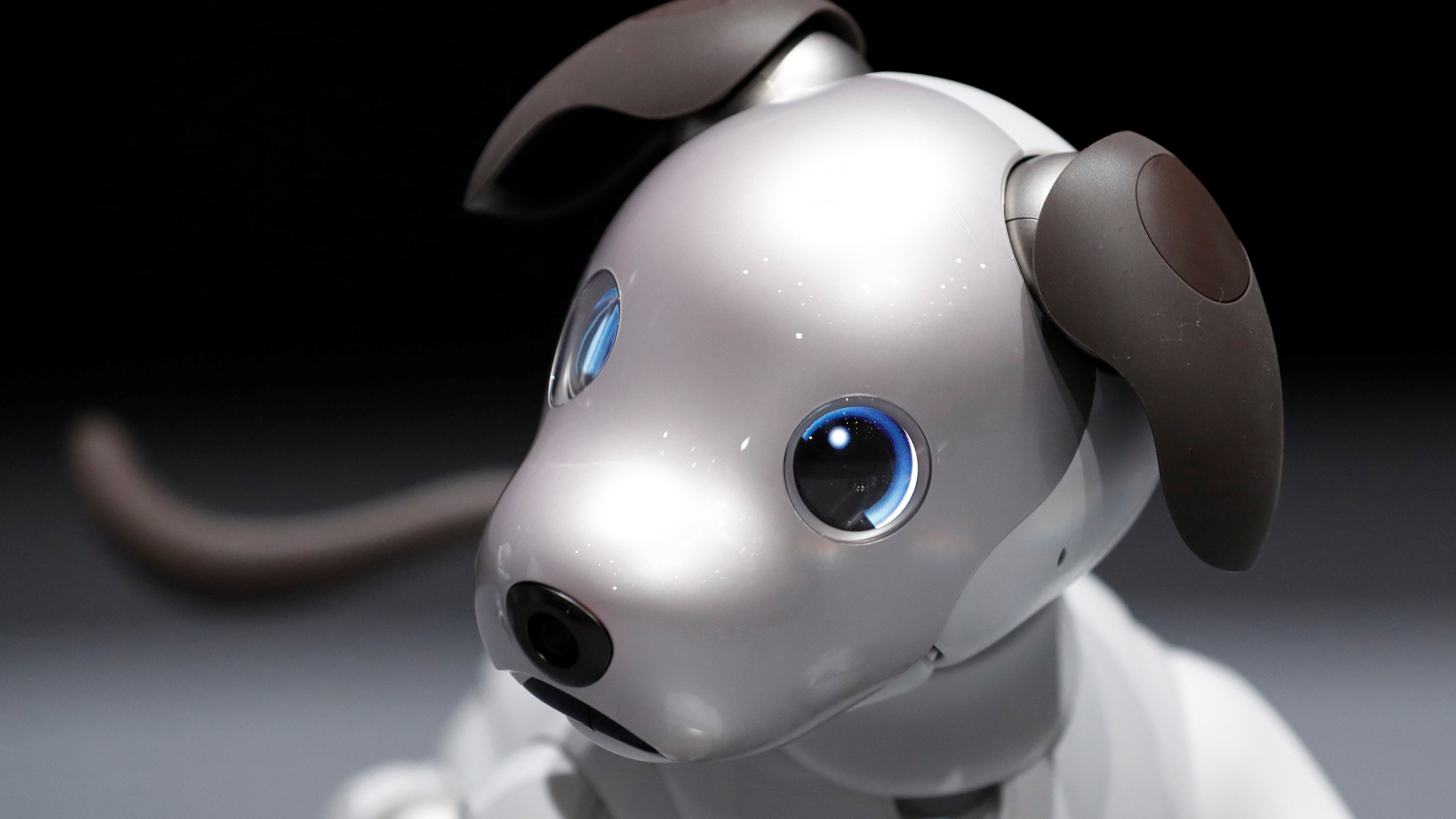 Wallpaper Sony Aibo Robot Dog 4k Hi Tech 16445