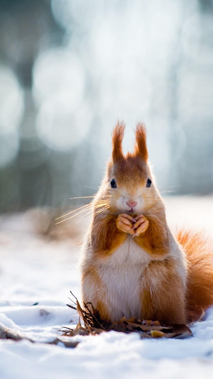 Wallpaper Squirrel, Cute Animals, Snow, Winter, 4k