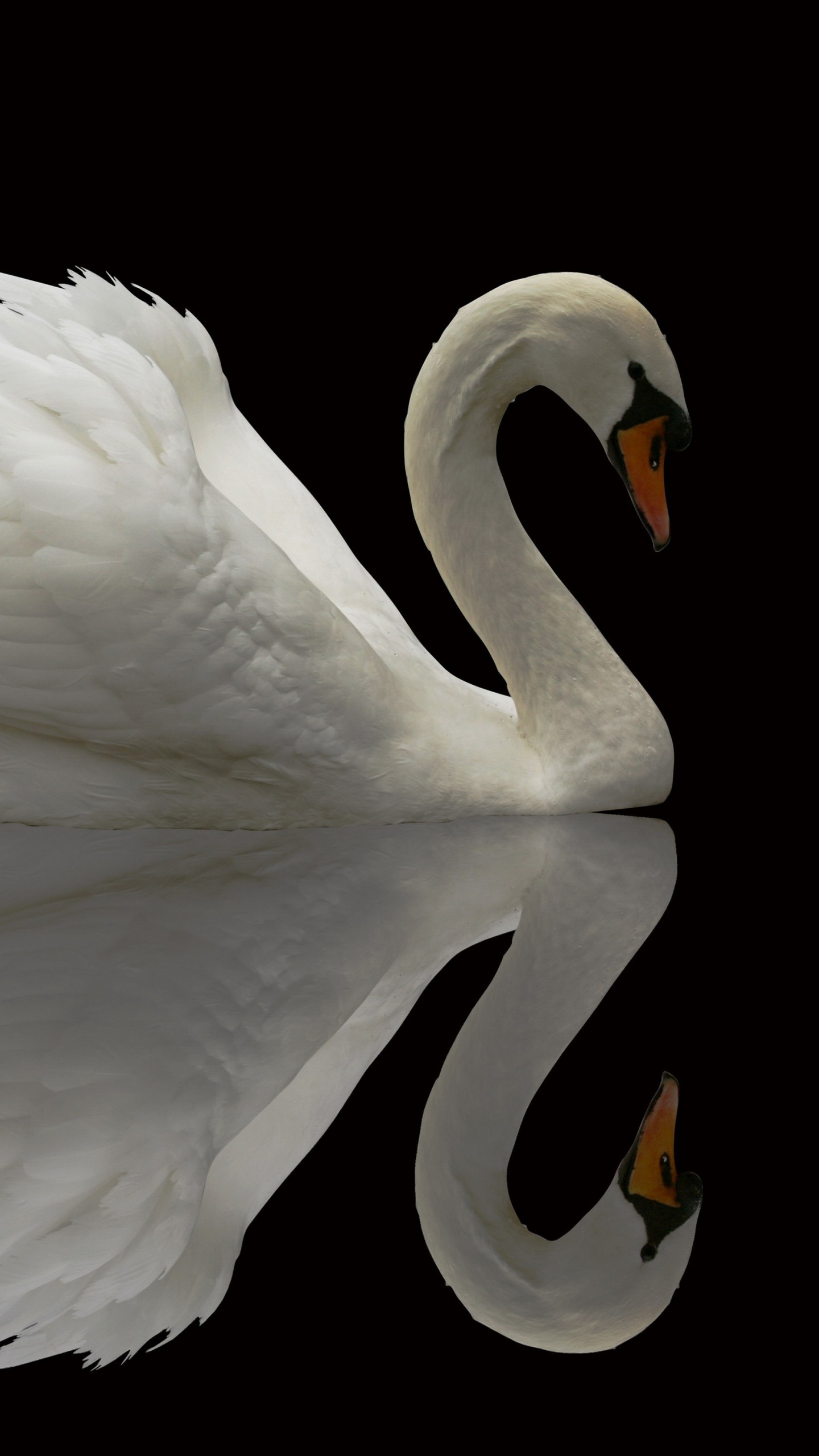 Wallpaper Swan Reflection Cute Animals Animals 4878