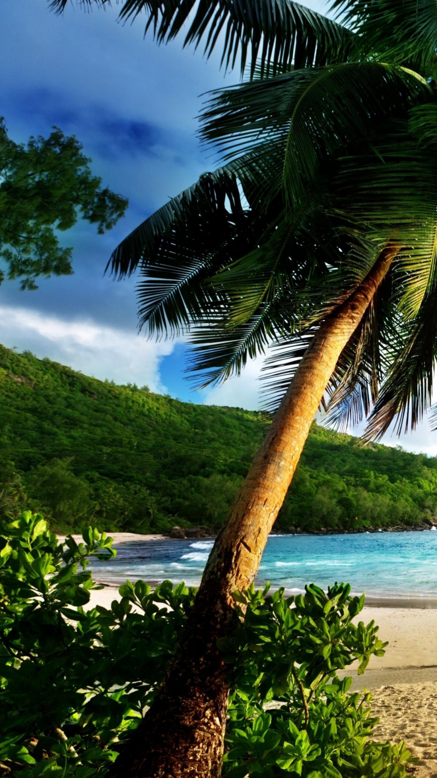 Wallpaper Thailand 5k 4k Wallpaper Ocean Shore Palms