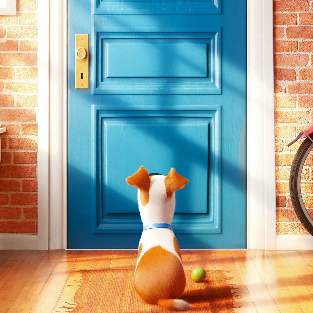 Trendy secret life of pets wallpaper for Wallpaper home animation