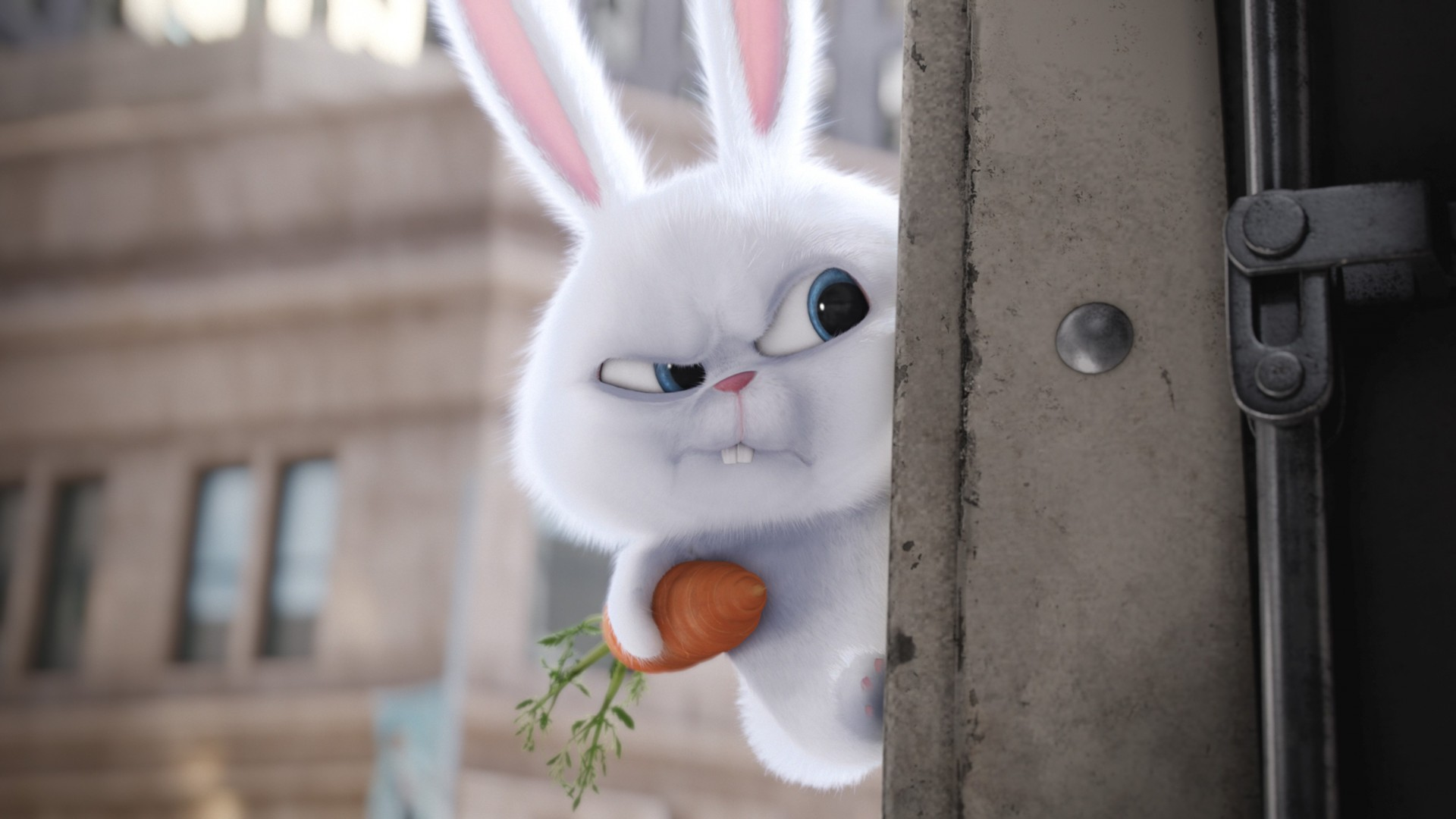 Wallpaper The Secret Life of Pets, rabbit, Best Animation ...
