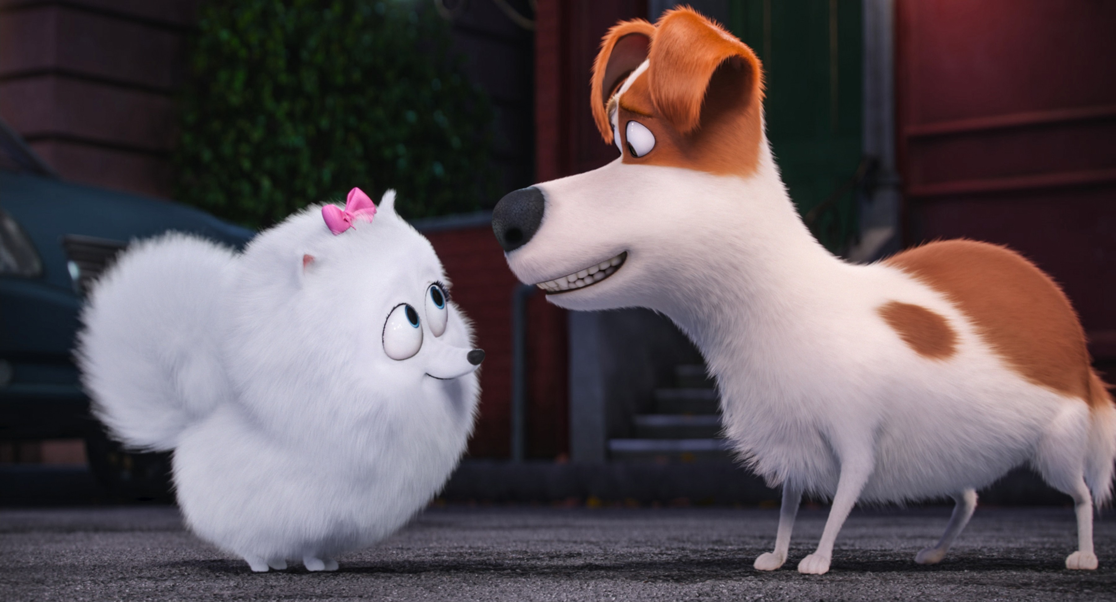 Secret Life Of Pets Wallpaper: Wallpaper The Secret Life Of Pets, Dog, Best Animation