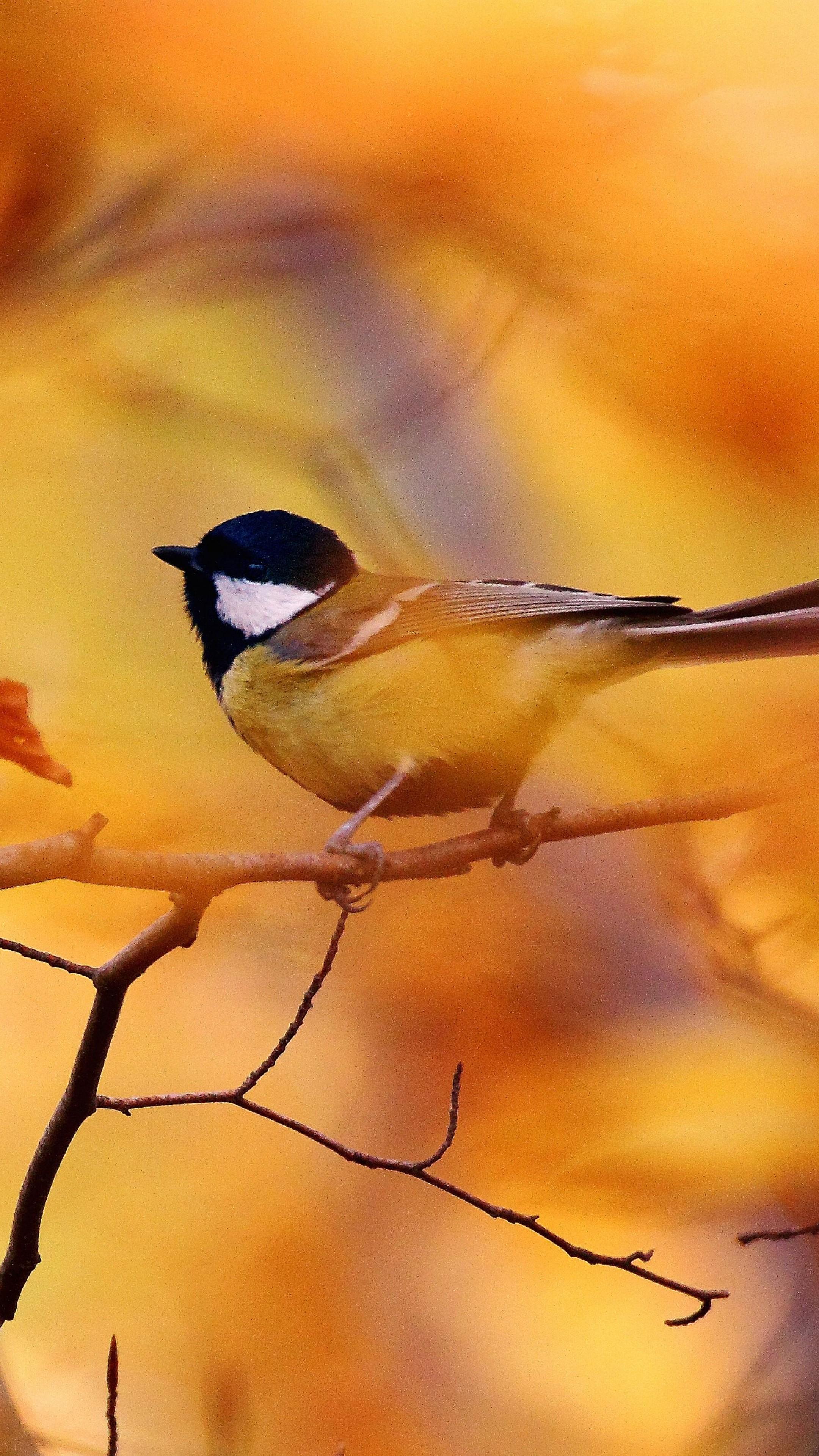 Lake Forest Sports Cars >> Wallpaper Tit, autumn, tree, blur, Animals #4523