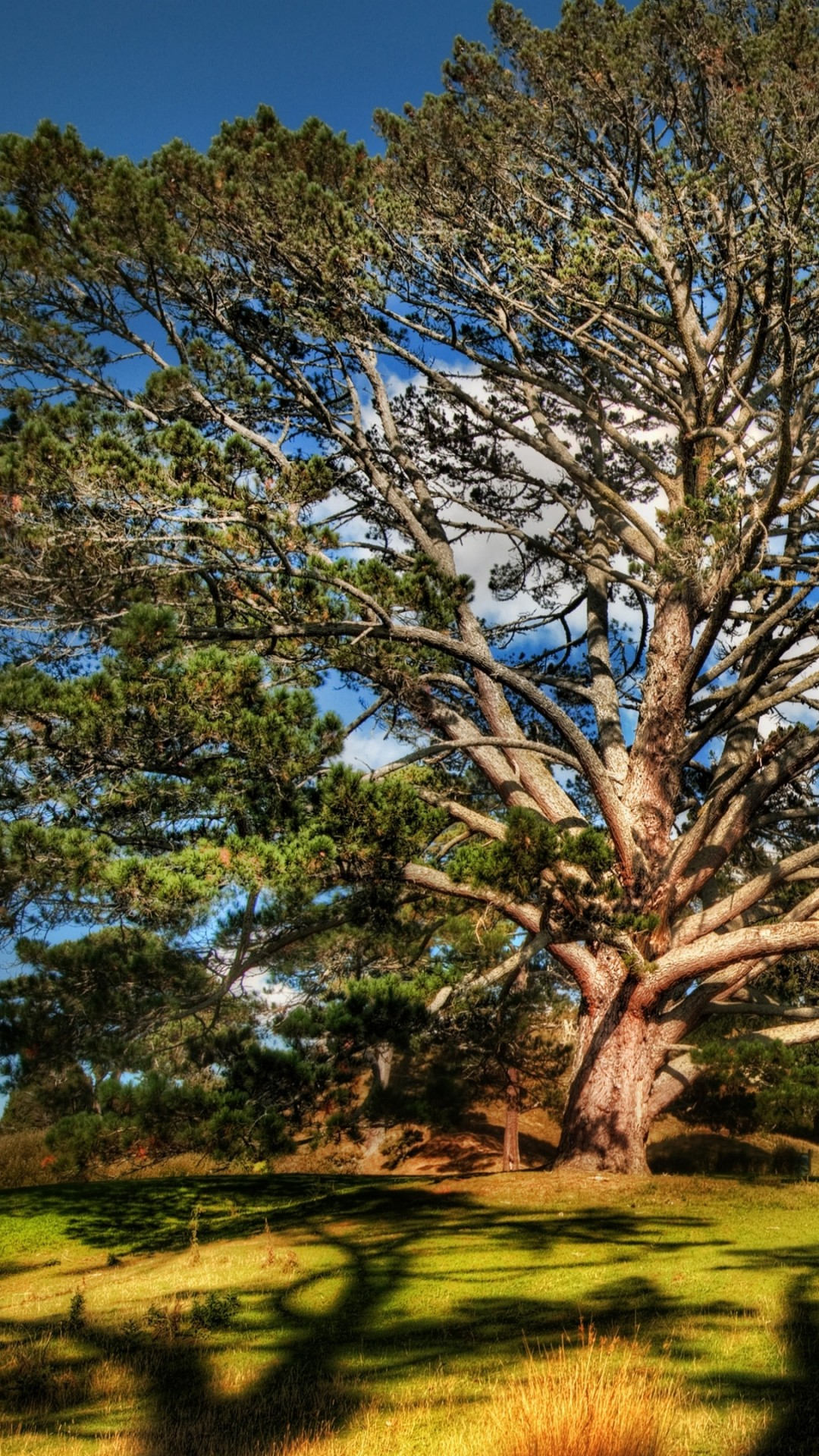 Wallpaper Tree, 4k, HD Wallpaper, Sky, Meadows, Nature #5260