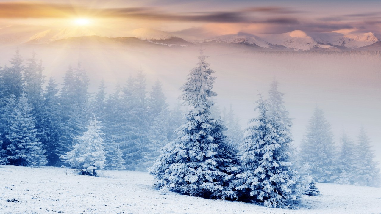 Wallpaper trees 5k 4k wallpaper pines mountains snow - Images of pine trees in snow ...