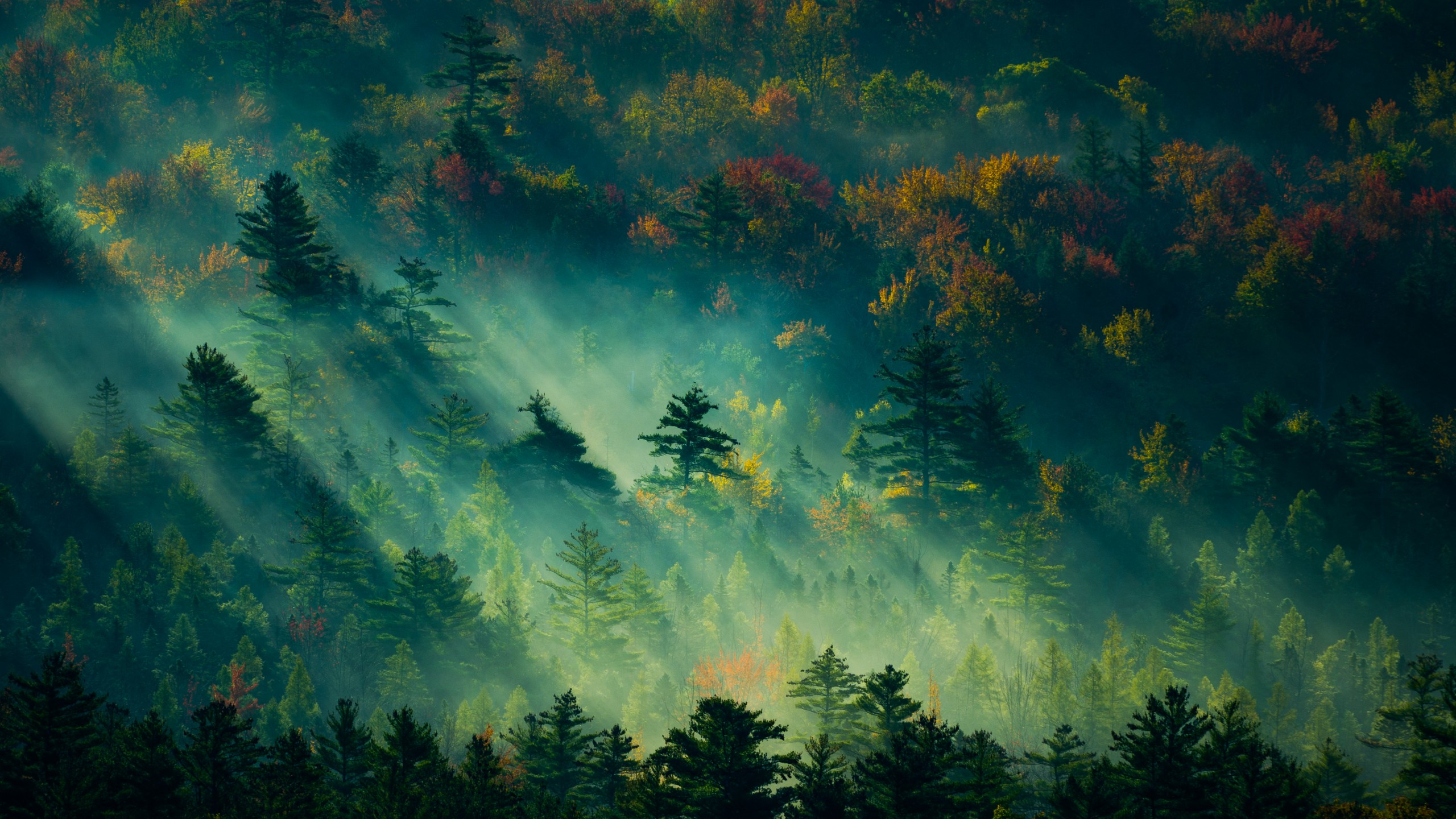 Wallpaper trees light green 4K Nature