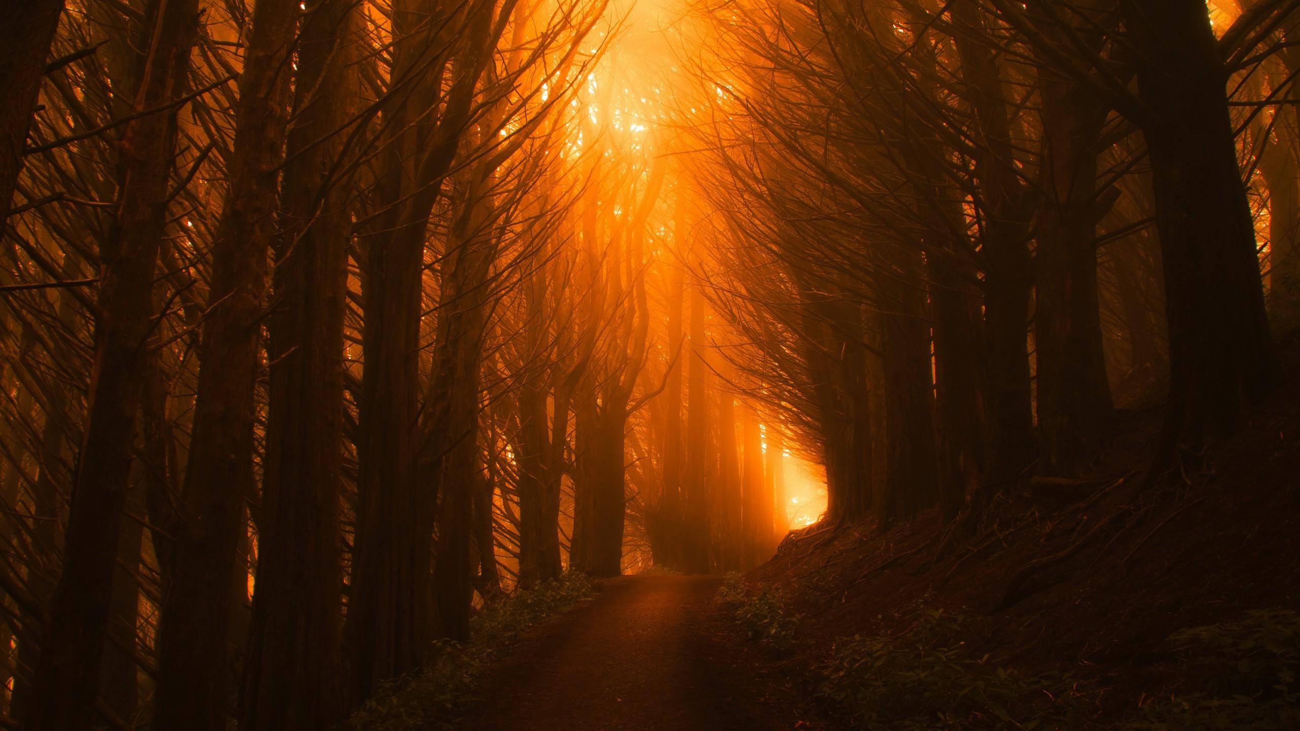 Wallpaper Trees Light Orange Forest Sunset 4k Nature