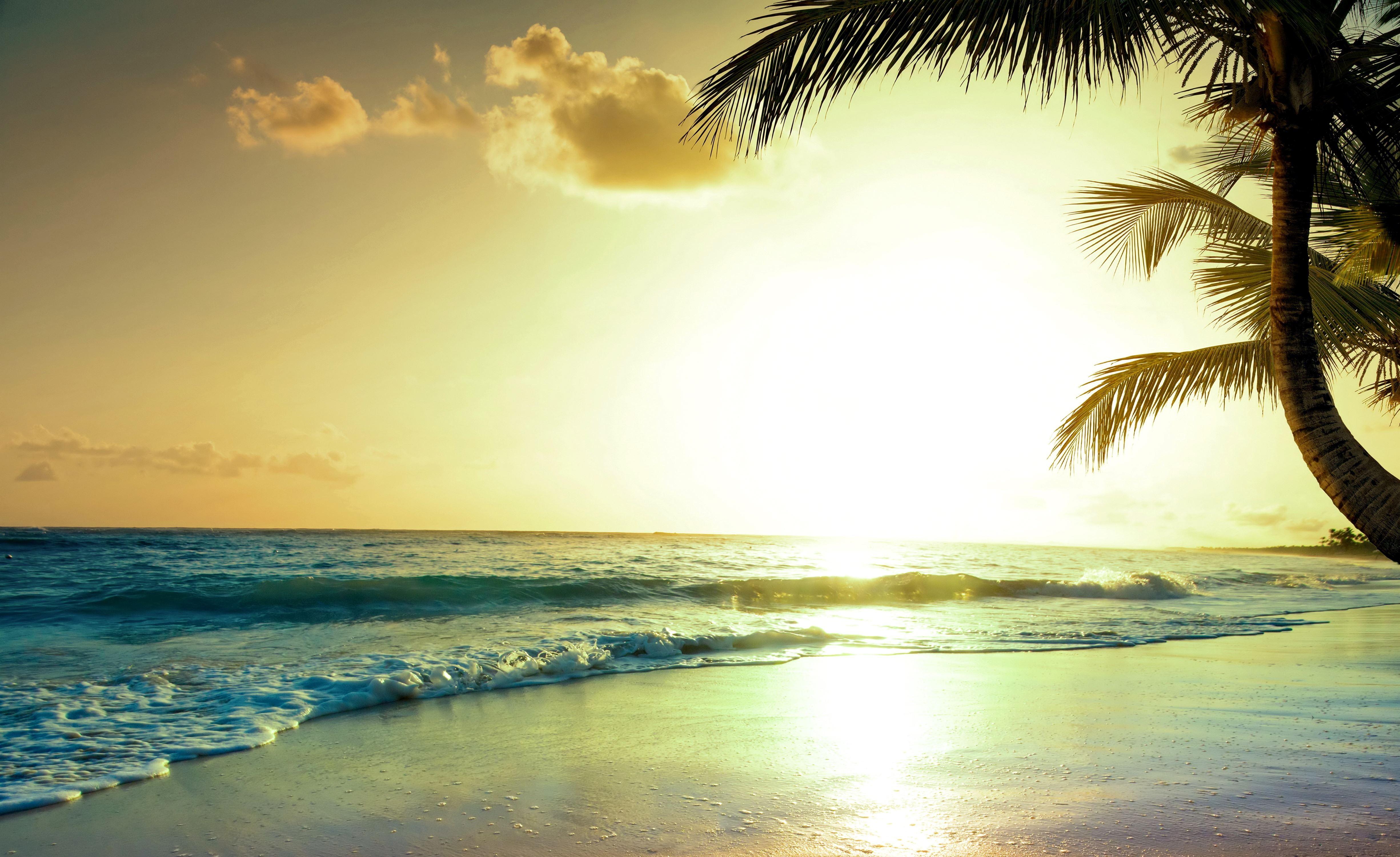 Wallpaper Tropical Beach 5k 4k Wallpaper Paradise