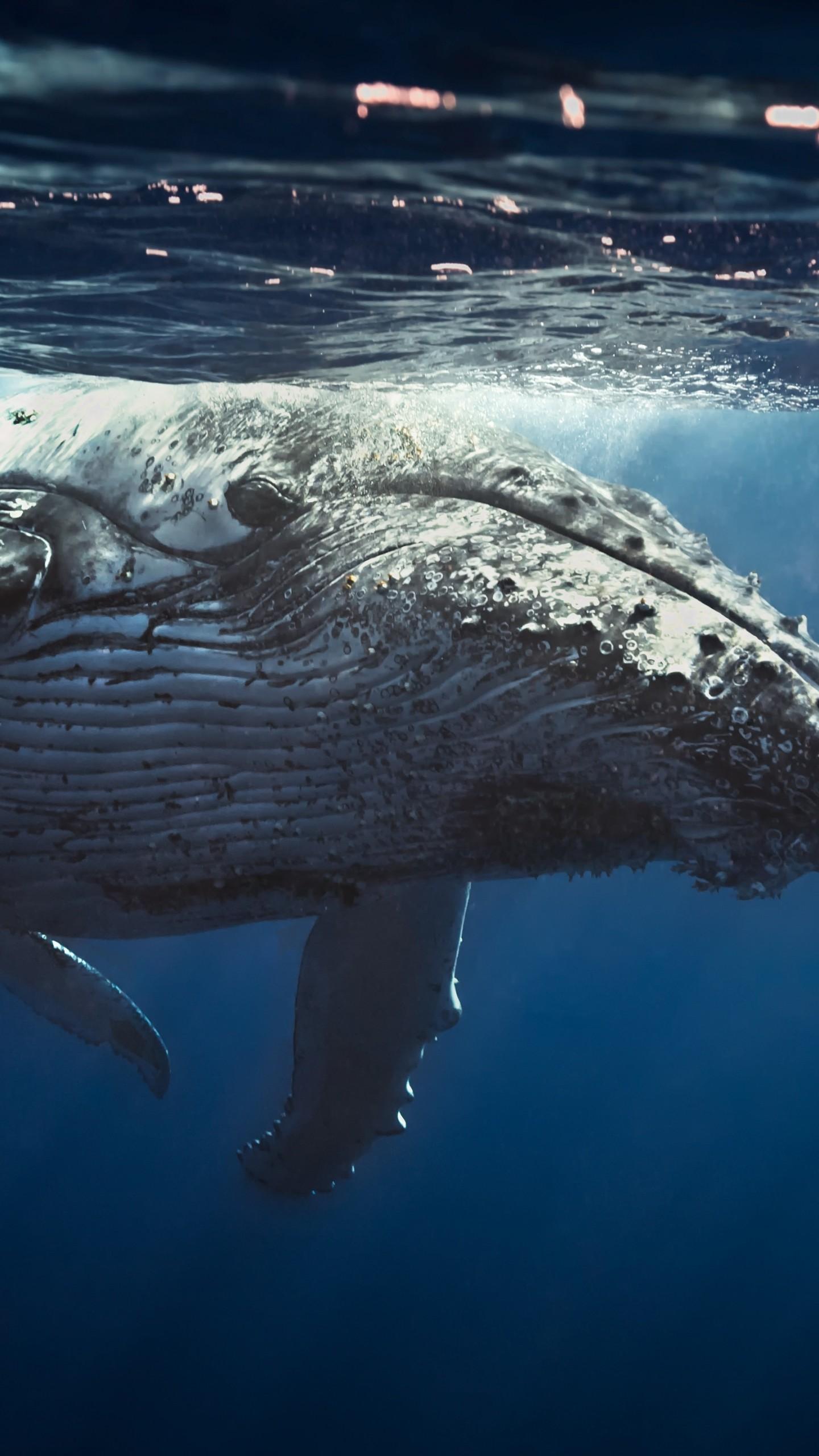 wallpaper underwater  whale  4k  animals  18612