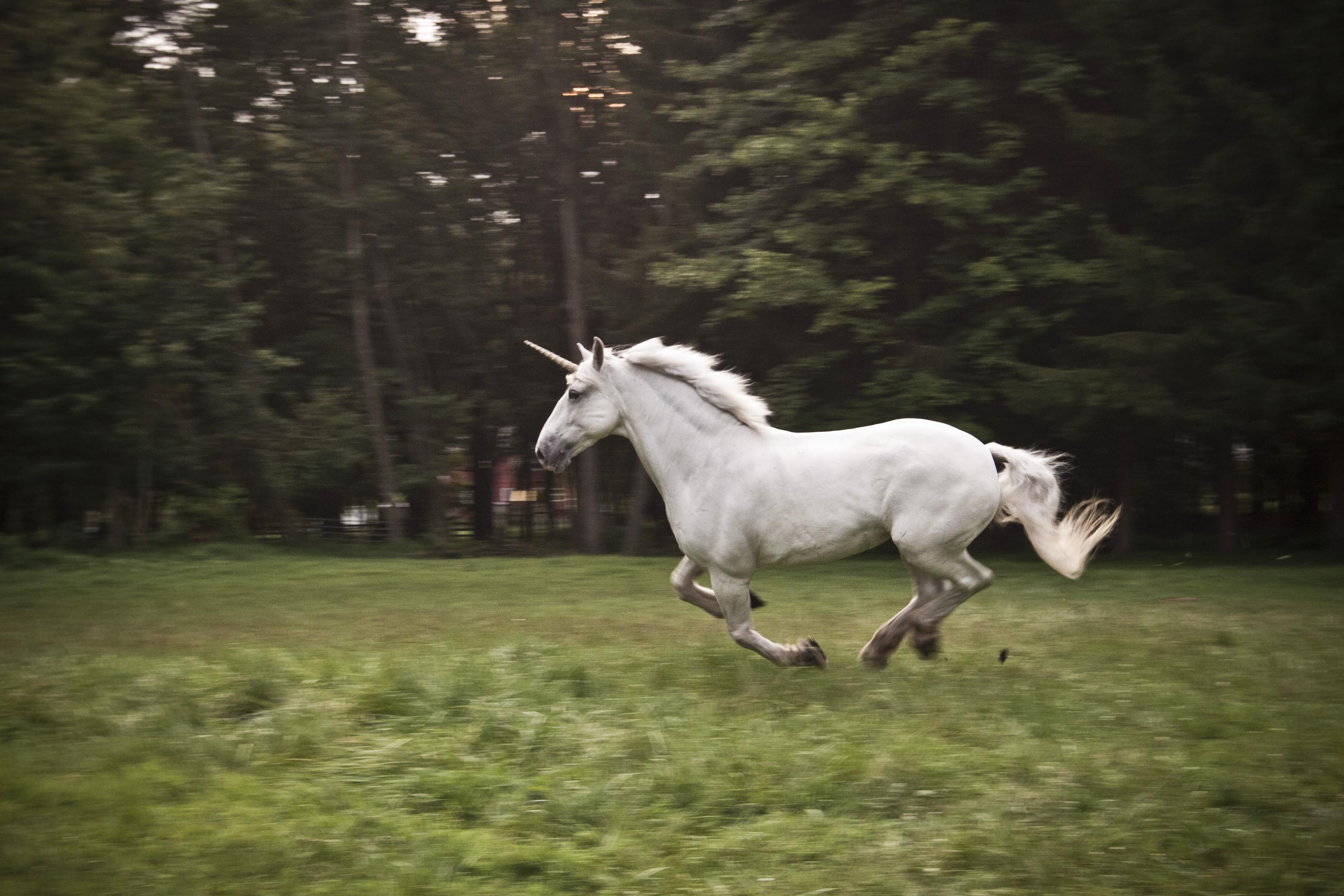 unicorn Wallpaper, Animals / Wild: unicorn, horse, nature, white Unicorn Background