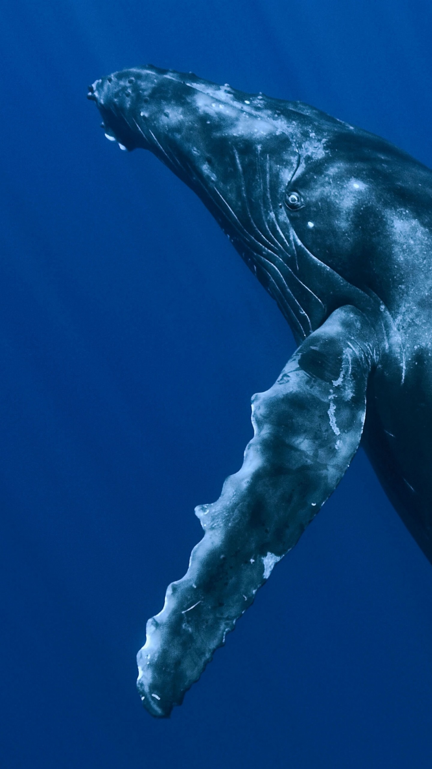 Wallpaper whale underwater best diving sites animals 5383 - Wallpapers sites list ...
