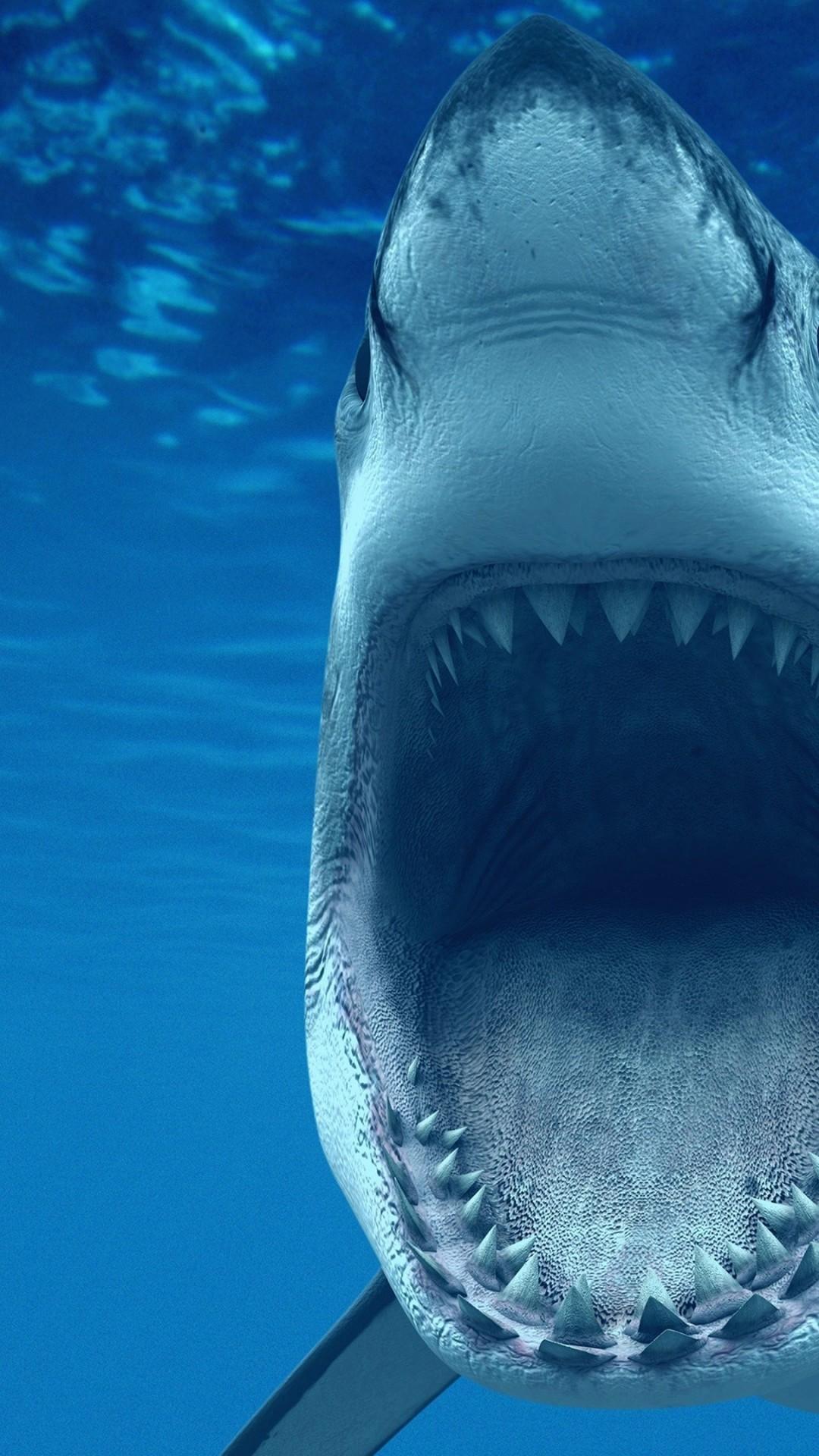 Wallpaper white shark 4k hd wallpaper caribbean aruba - Aquatic wallpaper ...