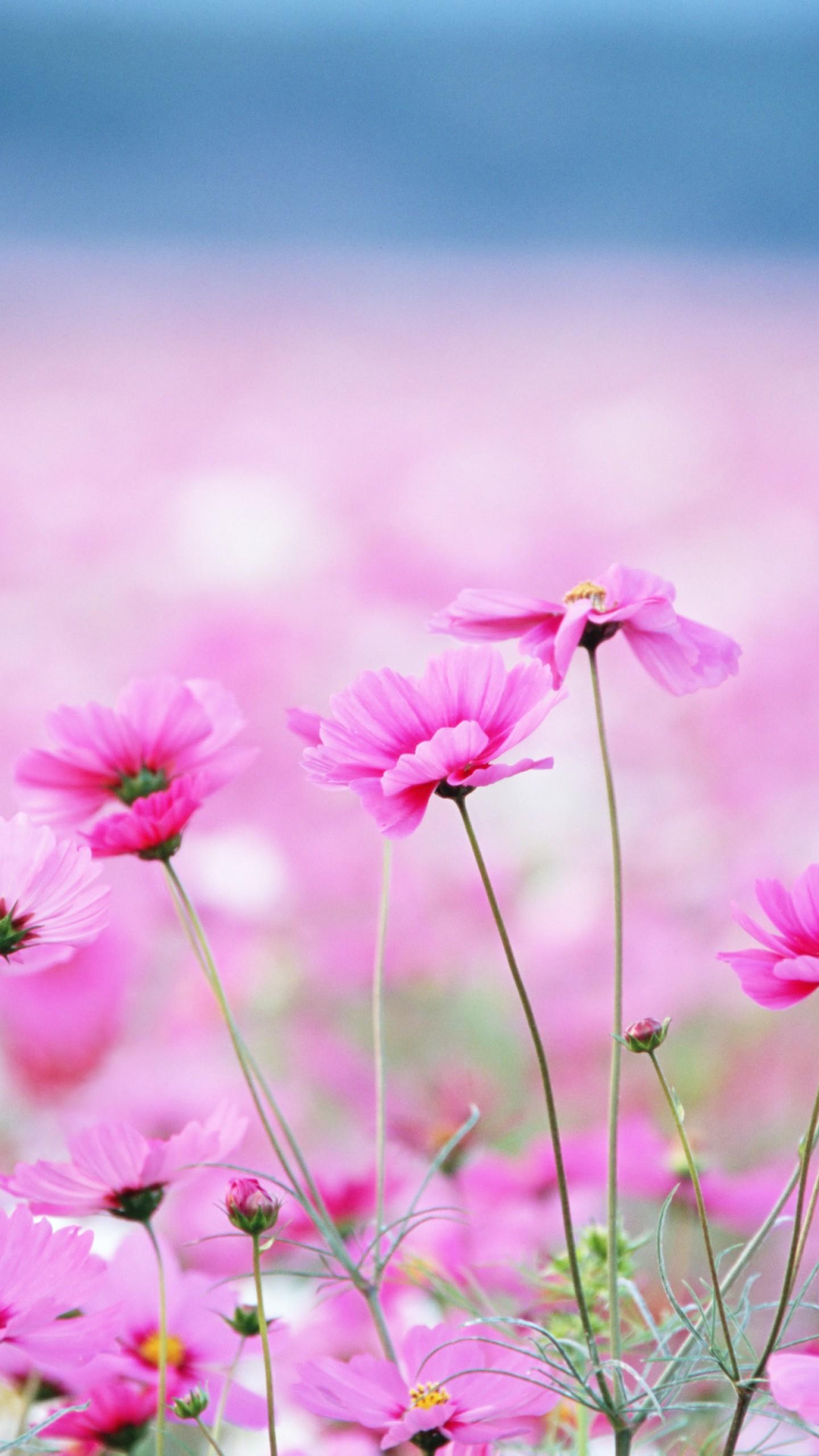 Wallpaper Wildflowers, HD, 4k wallpaper, field, pink ...