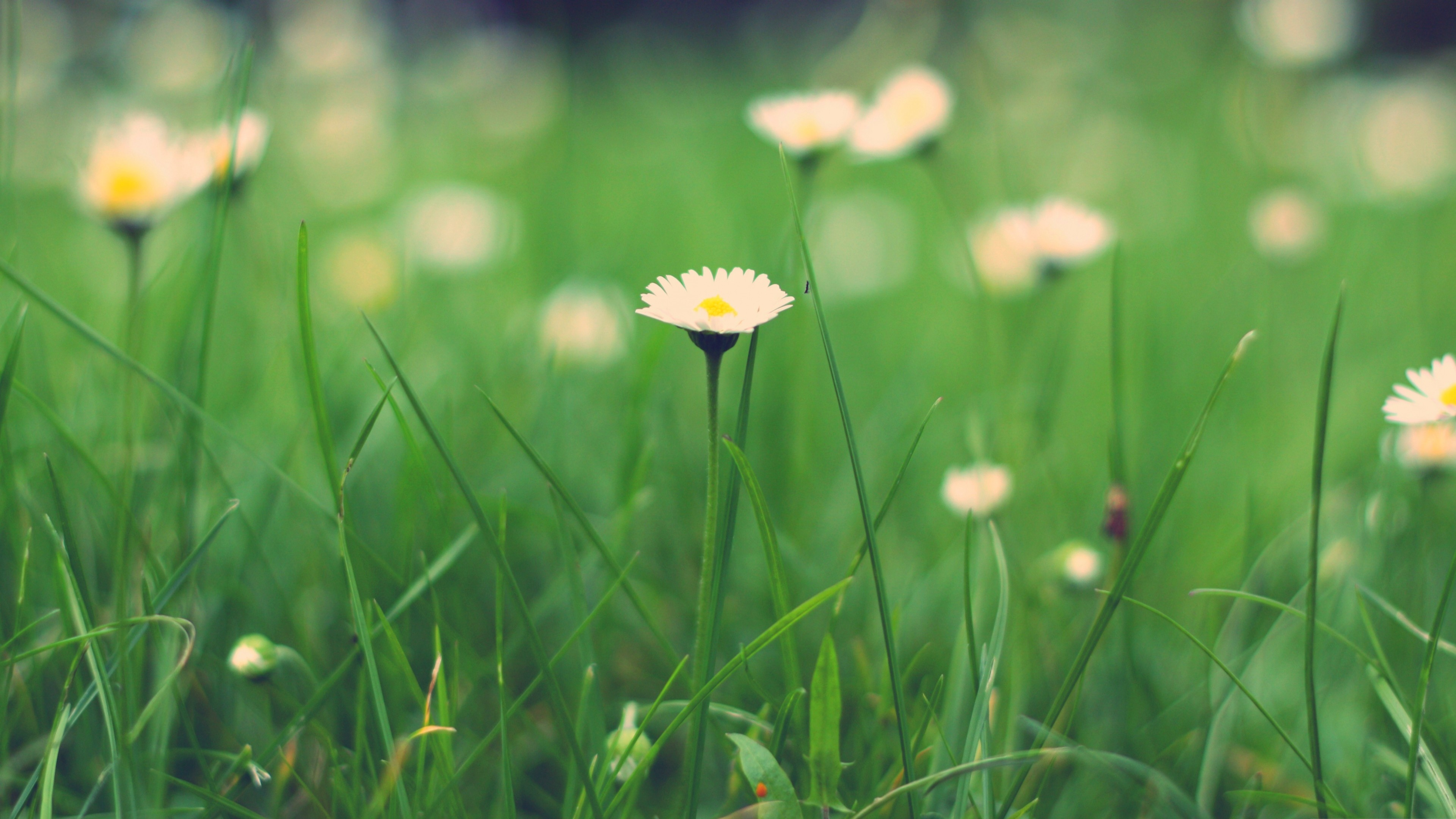 Green Green Meadow Wallpapers - WallpaperSafari