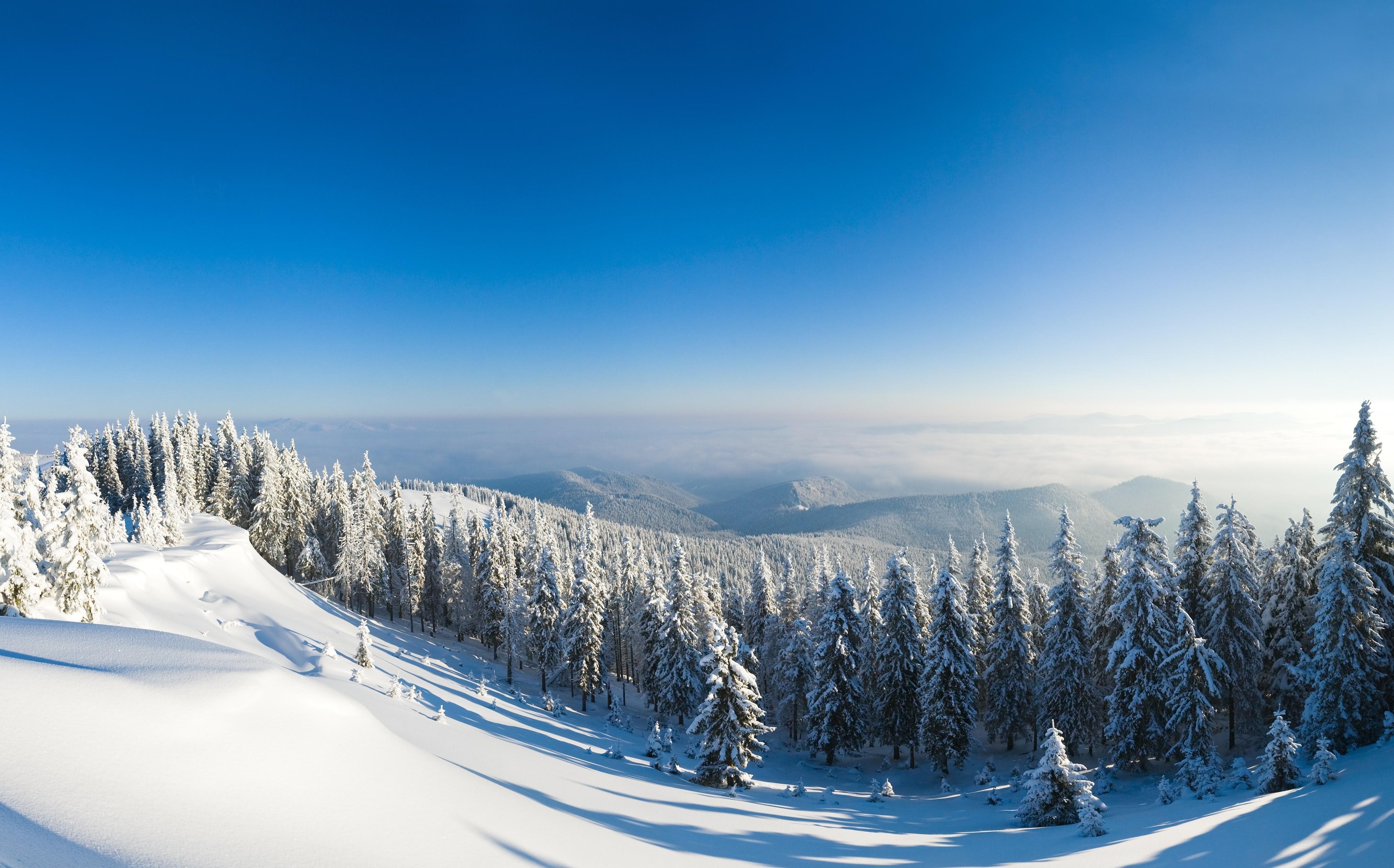 Great Wallpaper Mountain Winter - winter-forest-4119x2566-5k-4k-wallpaper-mountain-sun-snow-fir-trees-580  Picture_49421.jpg