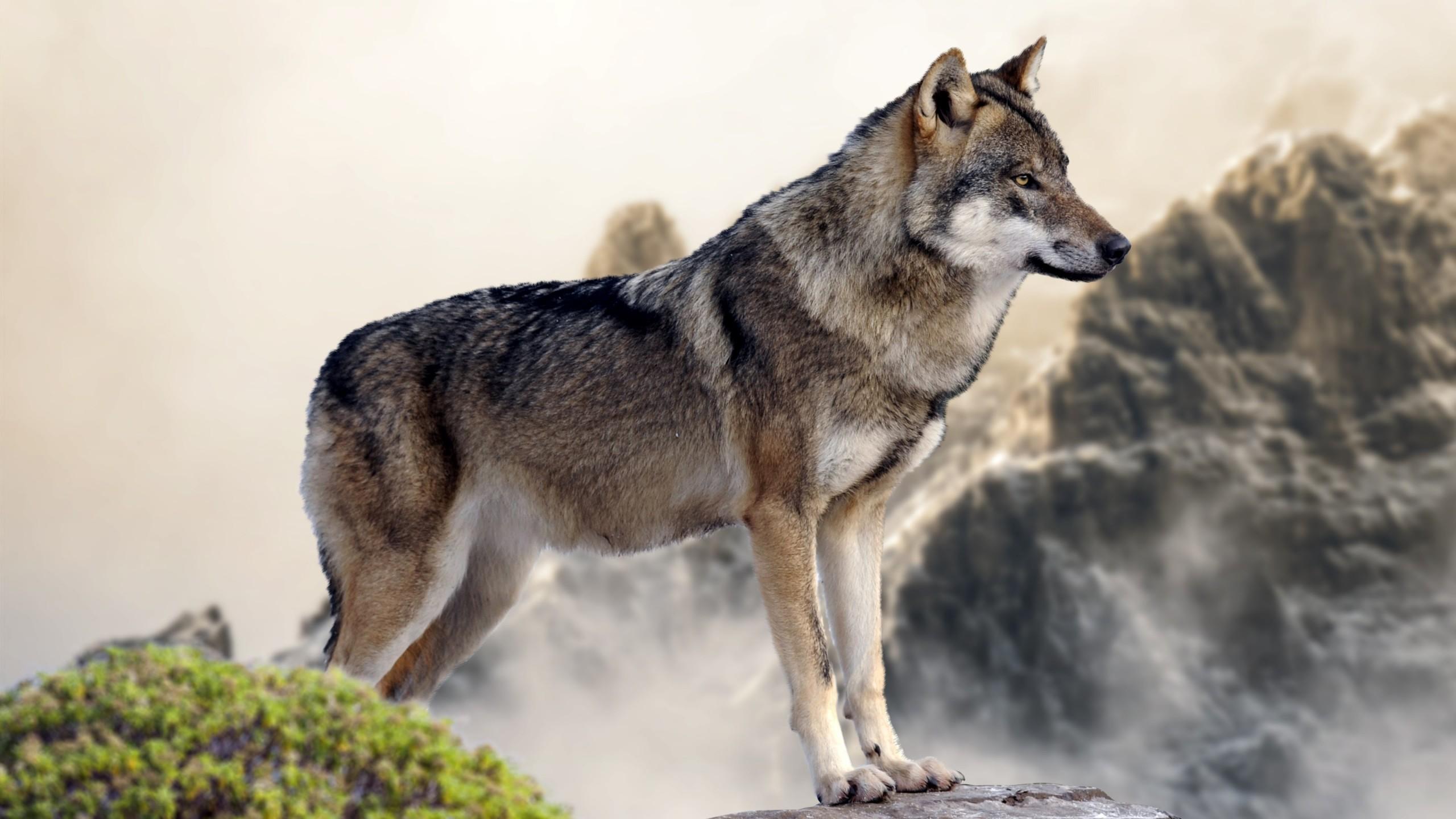Kinox.To Teen Wolf