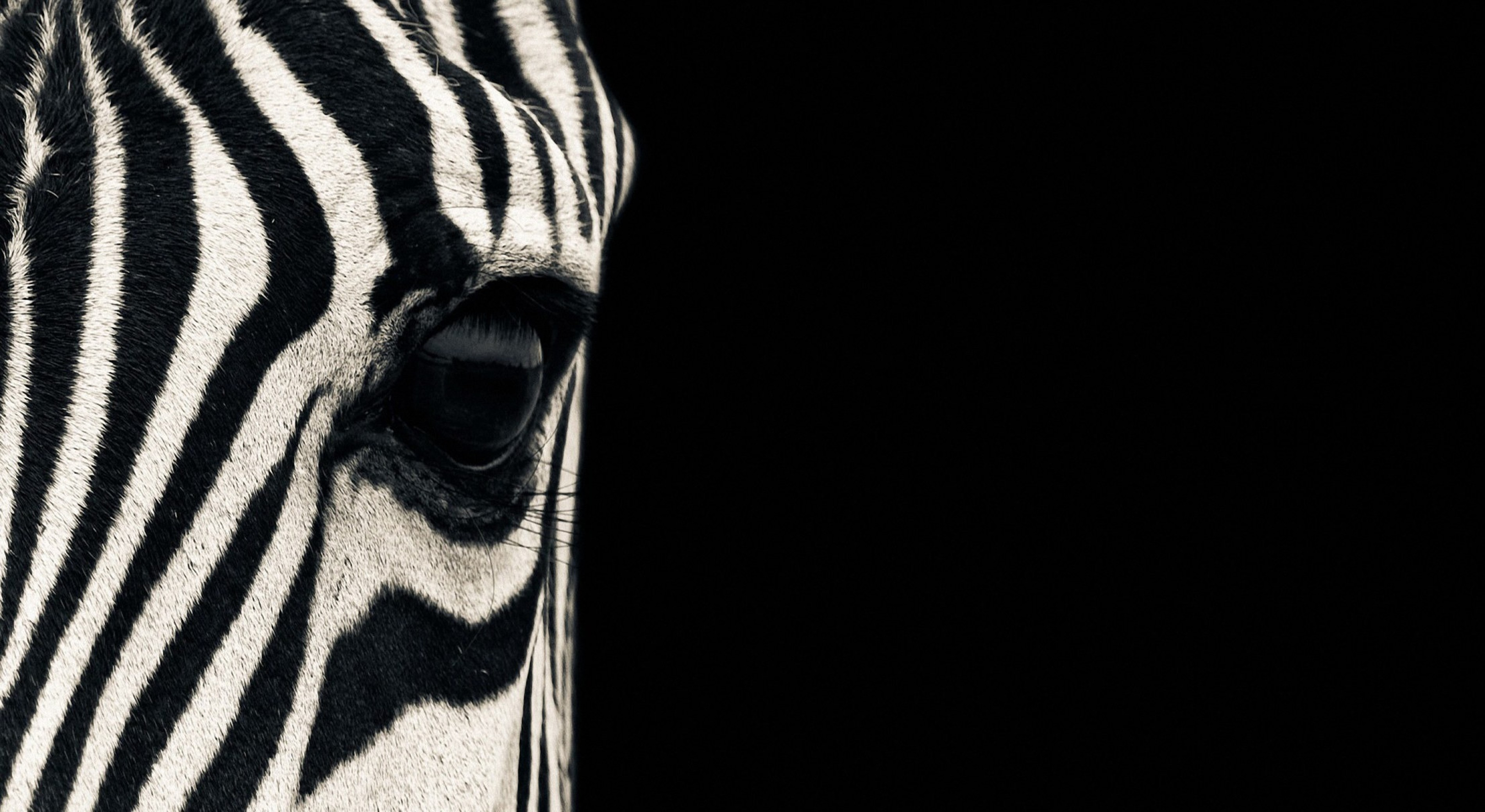 Black And White Animals Pictures